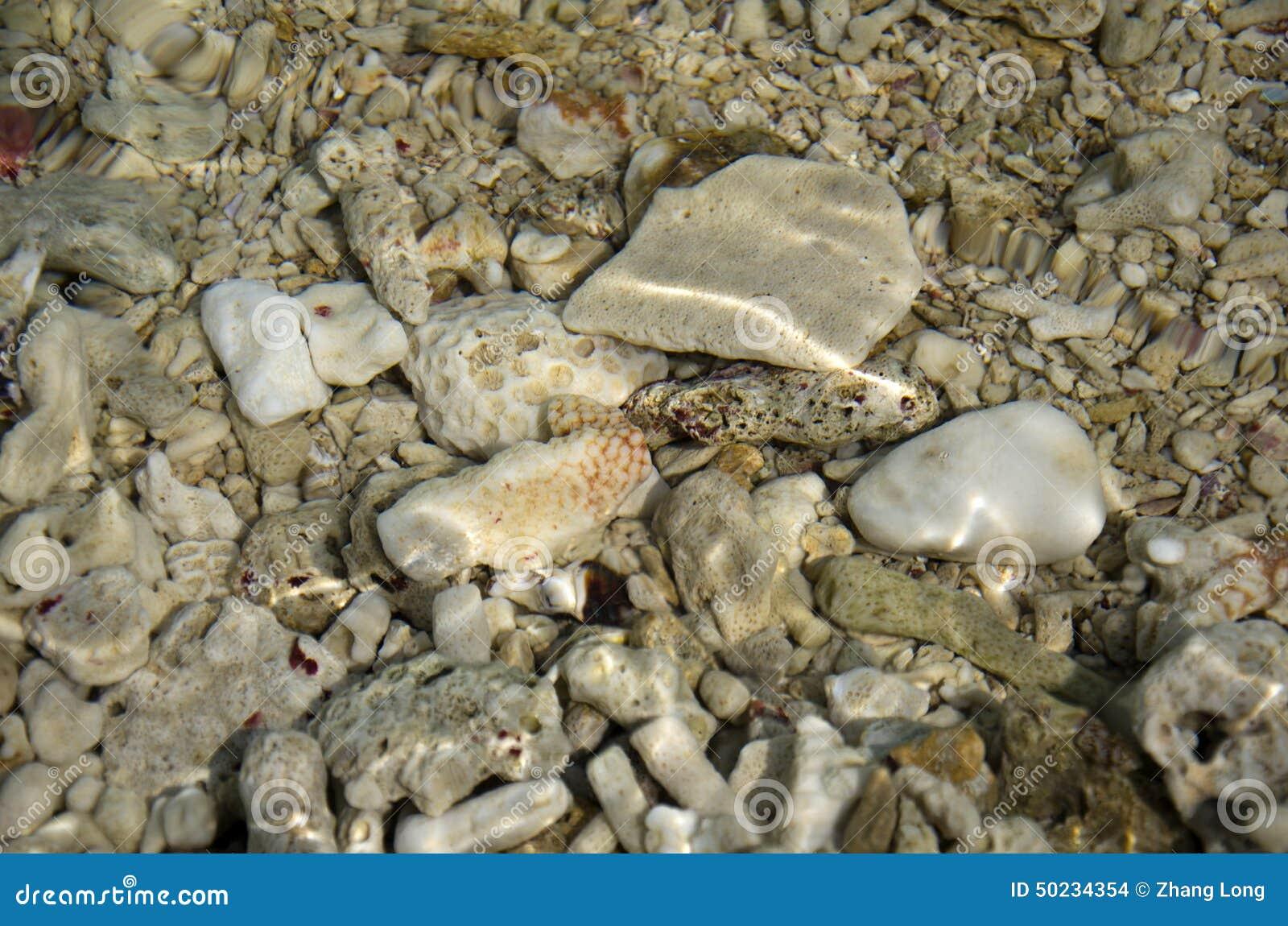 Döda koraller under vatten