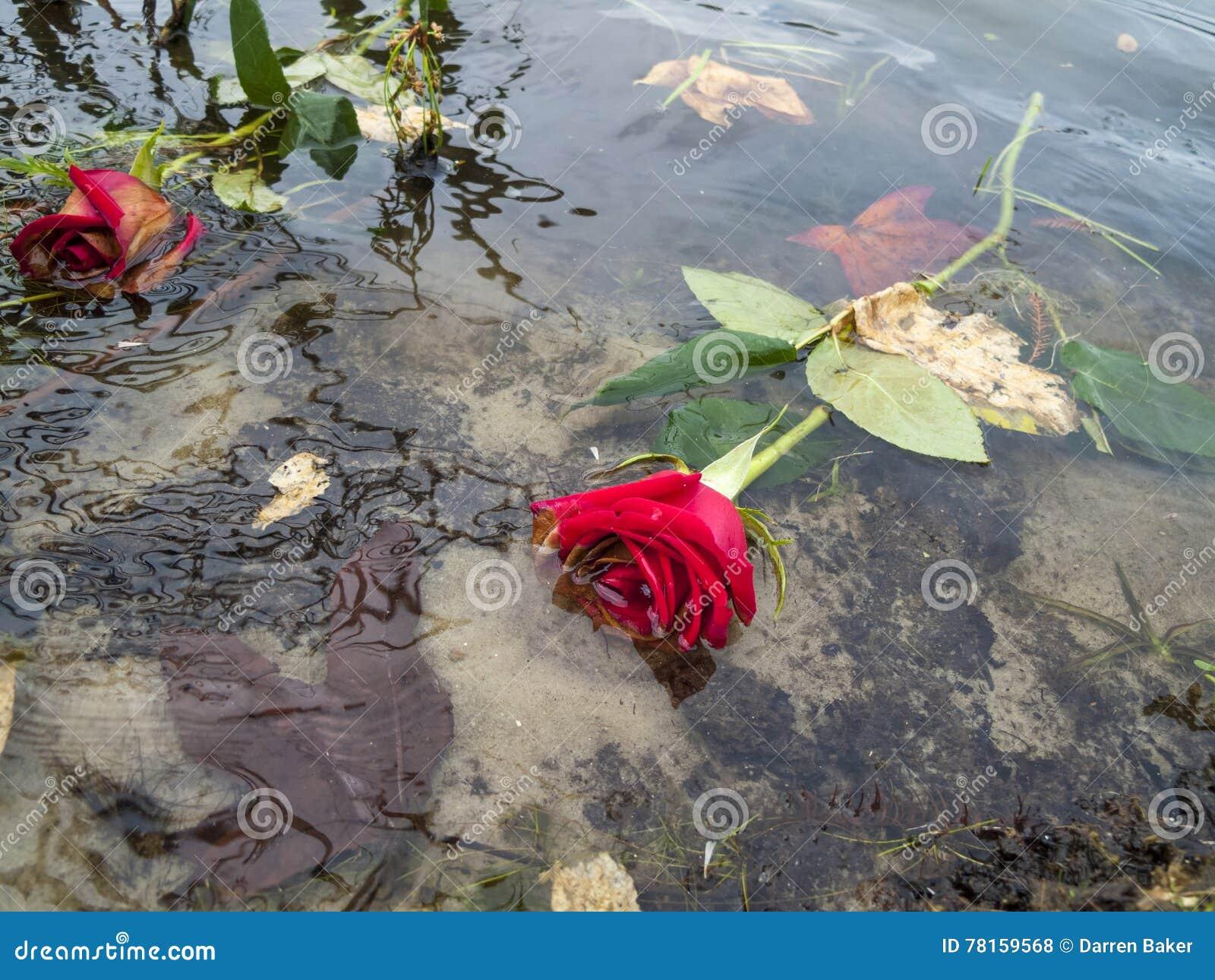 ros på sjön