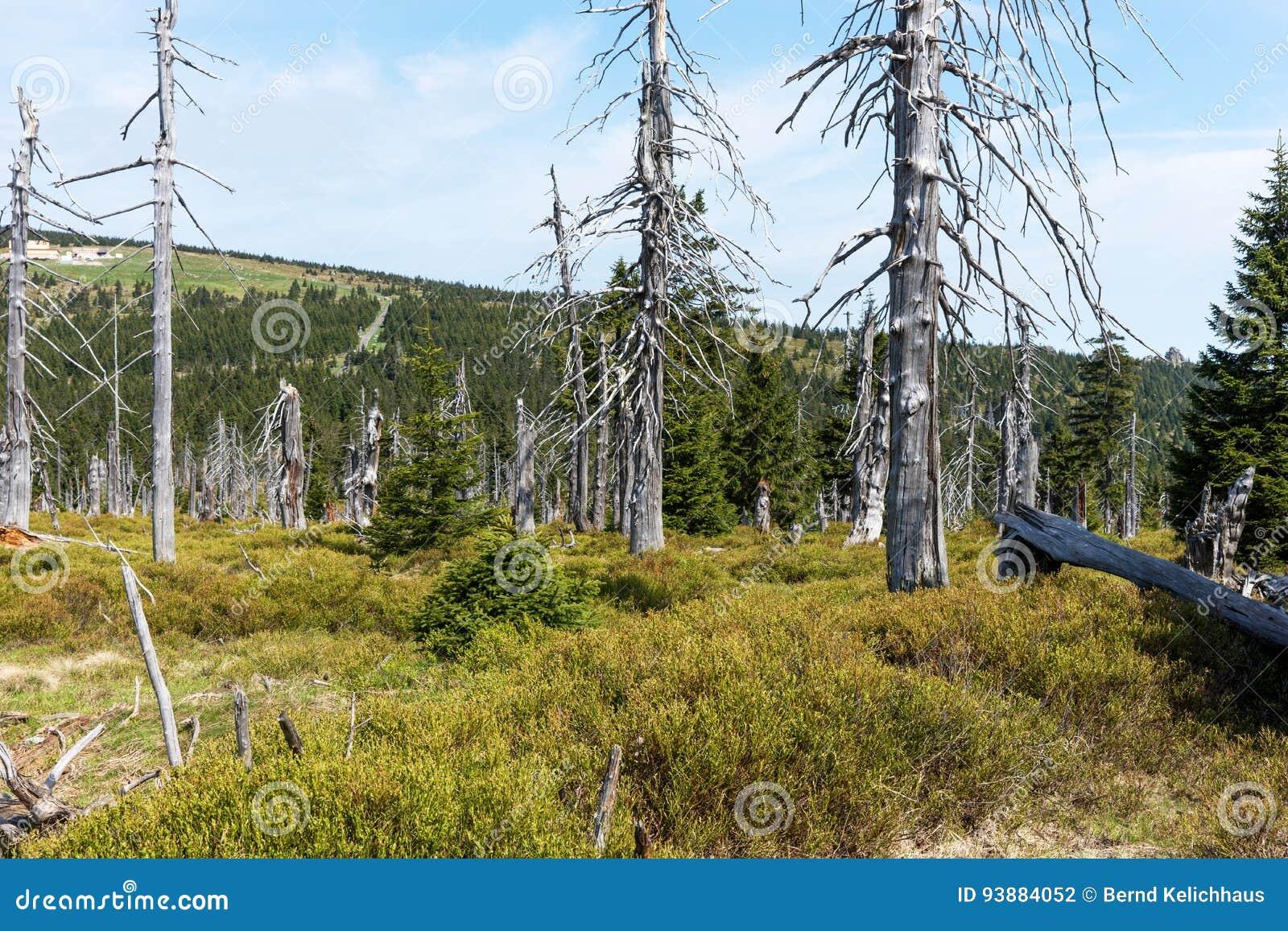 Döda träd - effekt av miljöbelastning