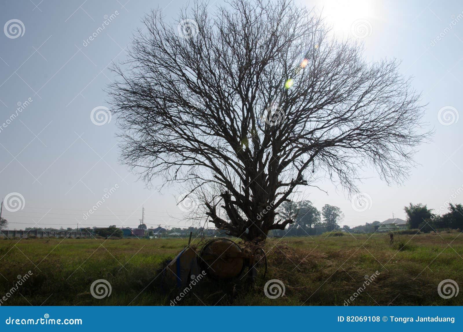 ta död på träd