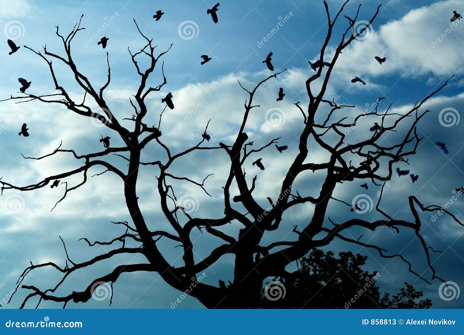 Düsterer toter Baum, Krähen