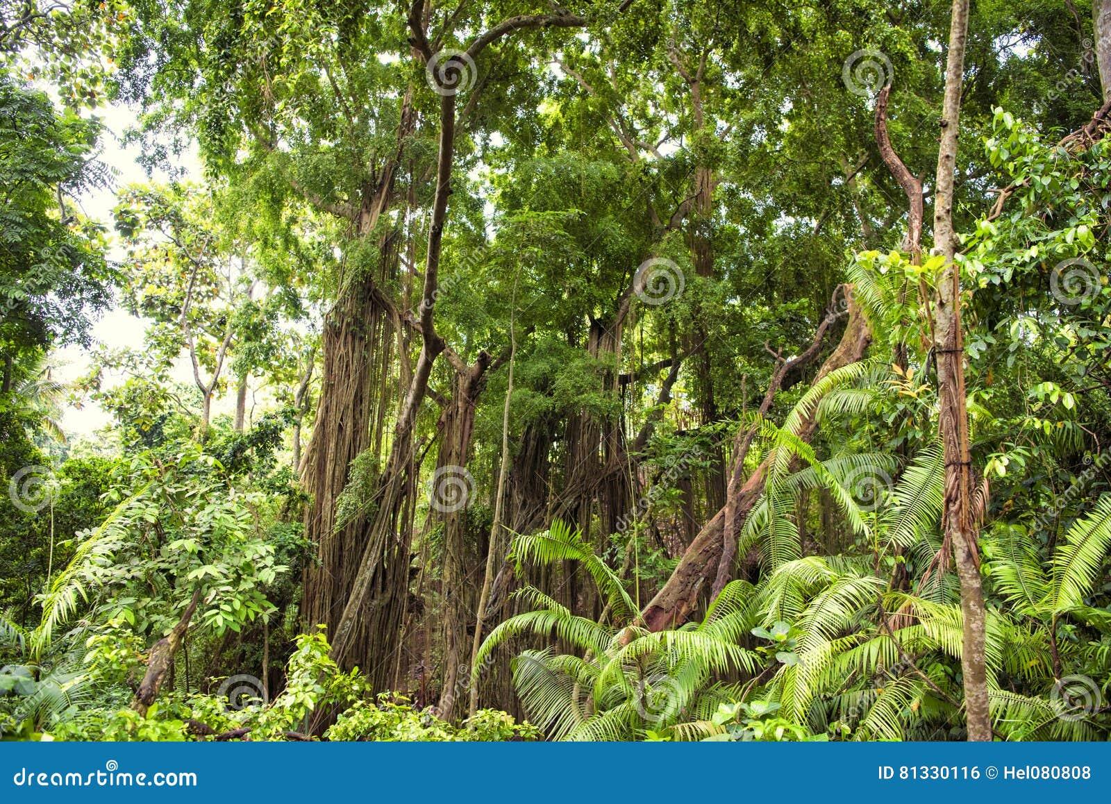 Dżungla las