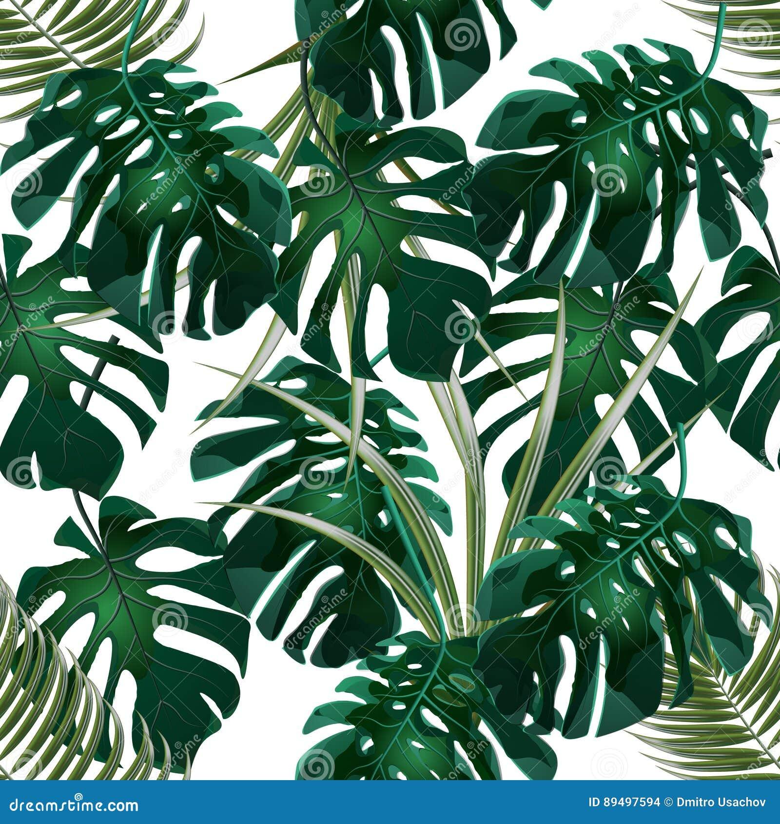 Dżungla Zieleni gąszcze tropikalni palmowi liście i monstera bezszwowy kwiecisty wzoru pojedynczy białe tło