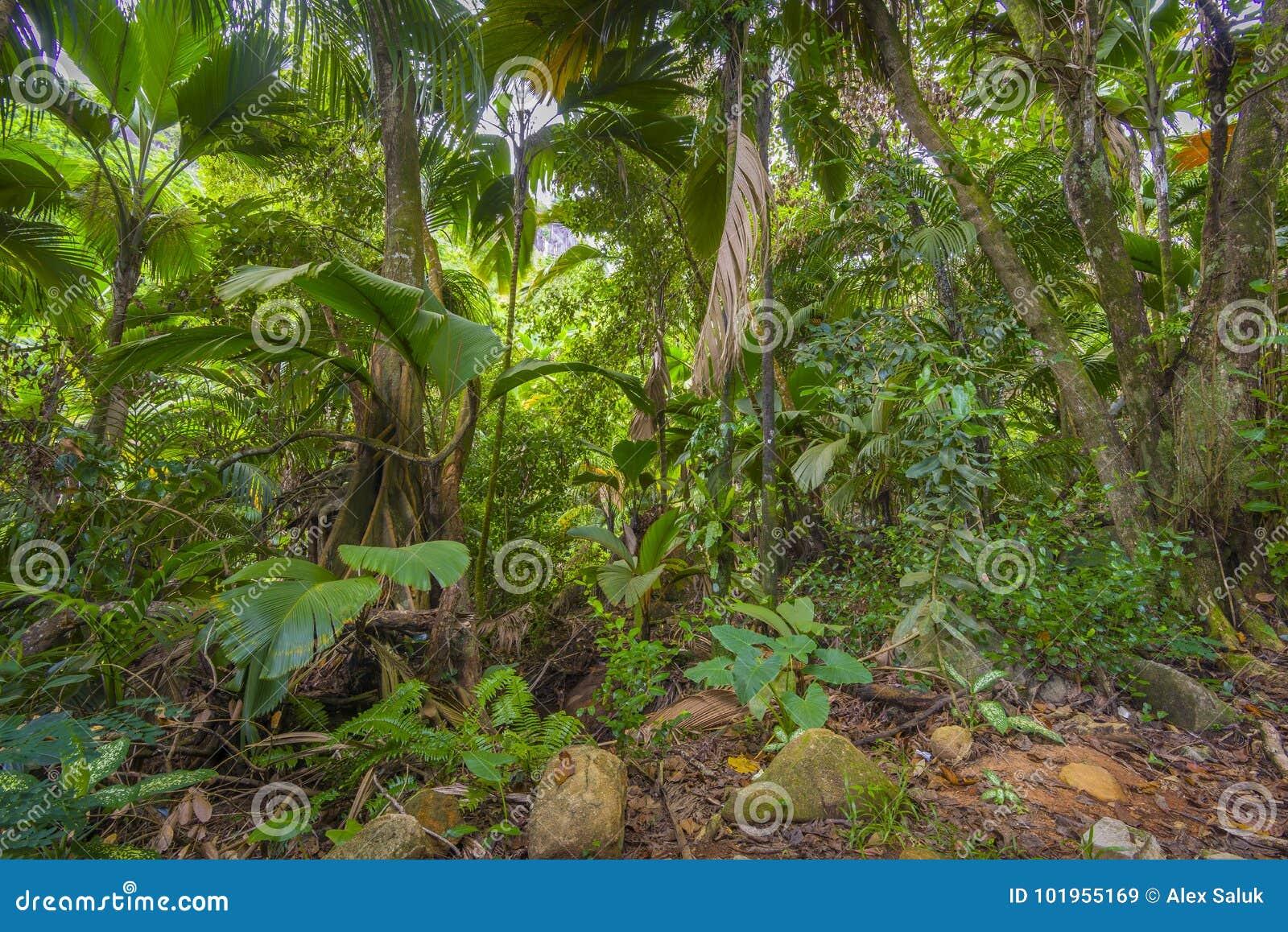 Dżungle, Seychelles