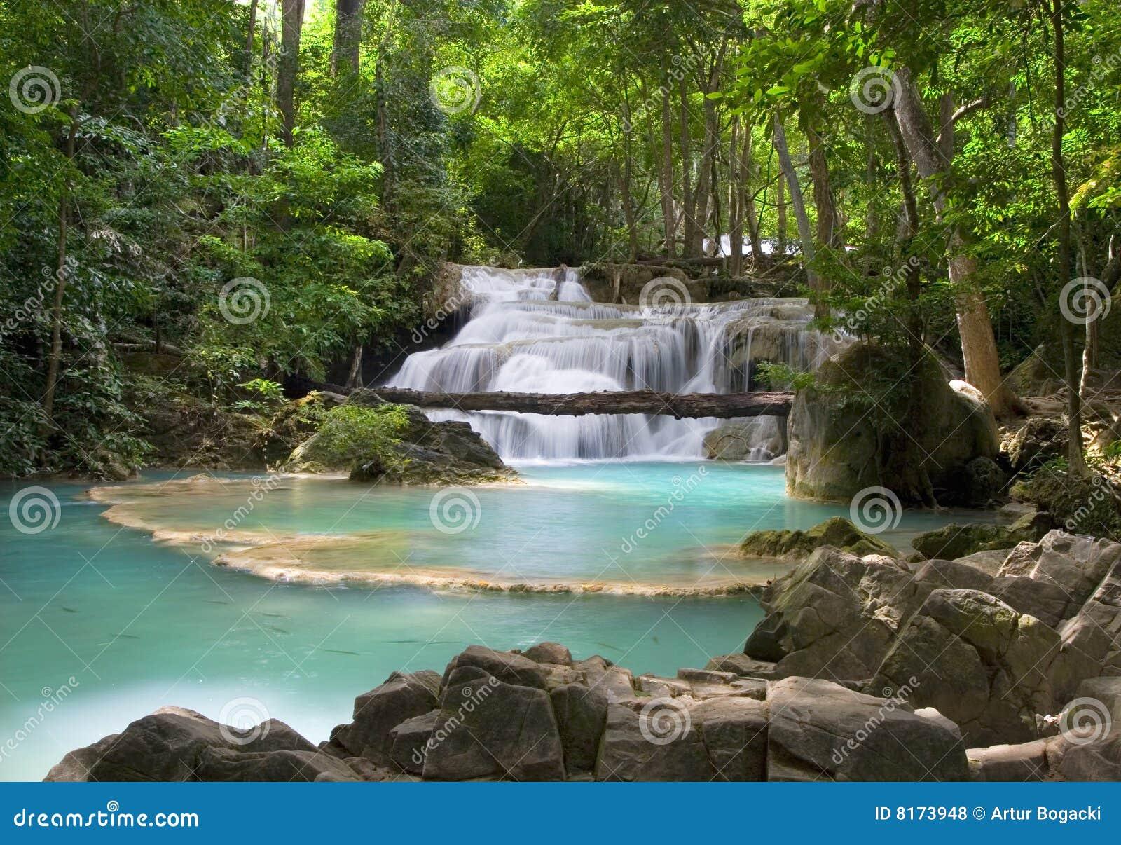 Dżungli sceneria