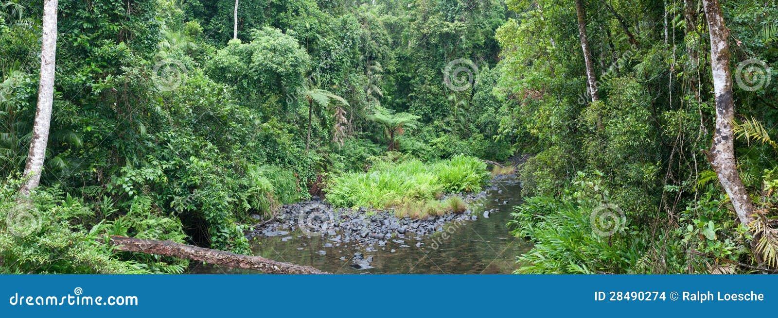 Dżungli zatoczka