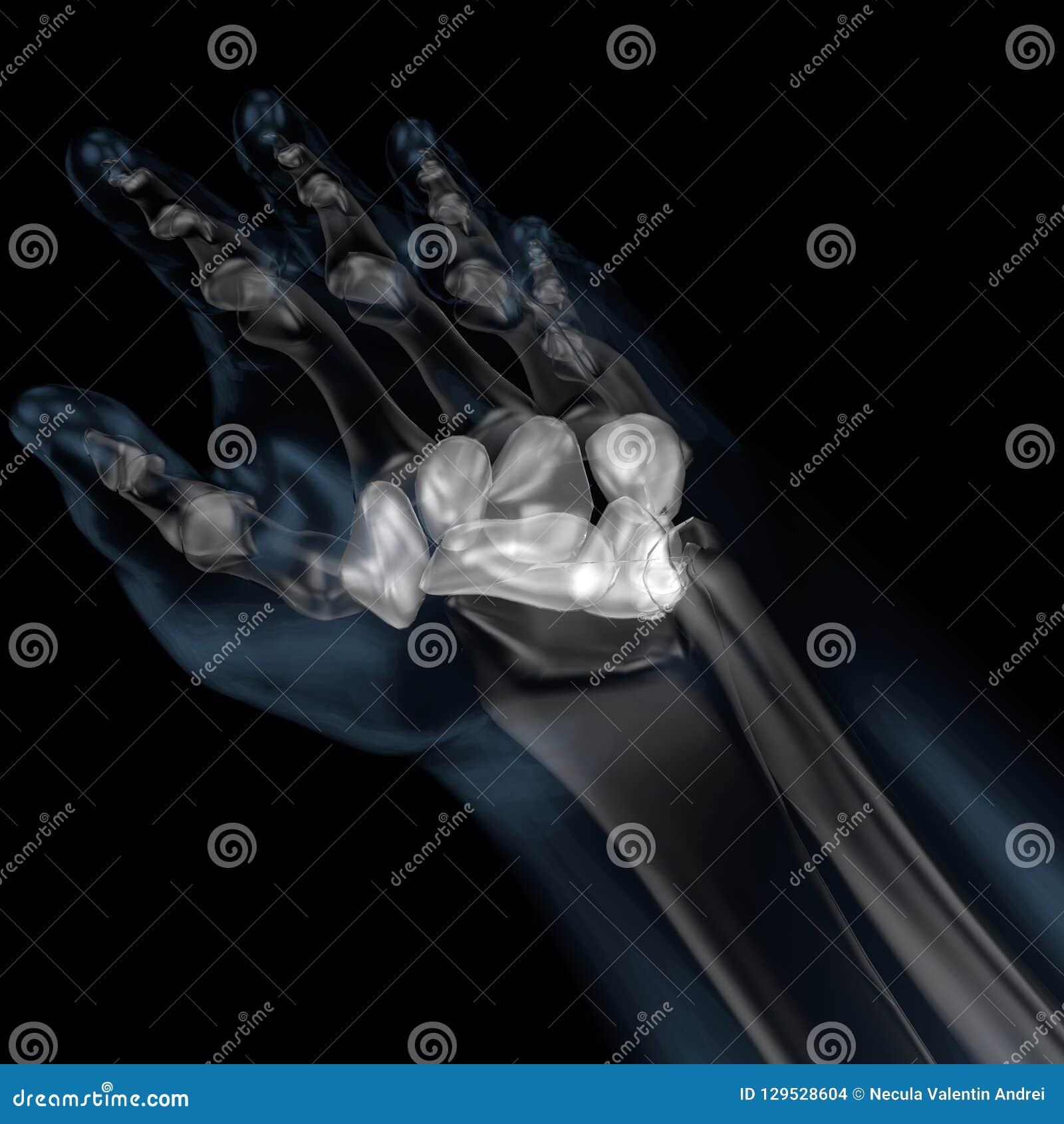 3d人体骨骼腕骨的例证