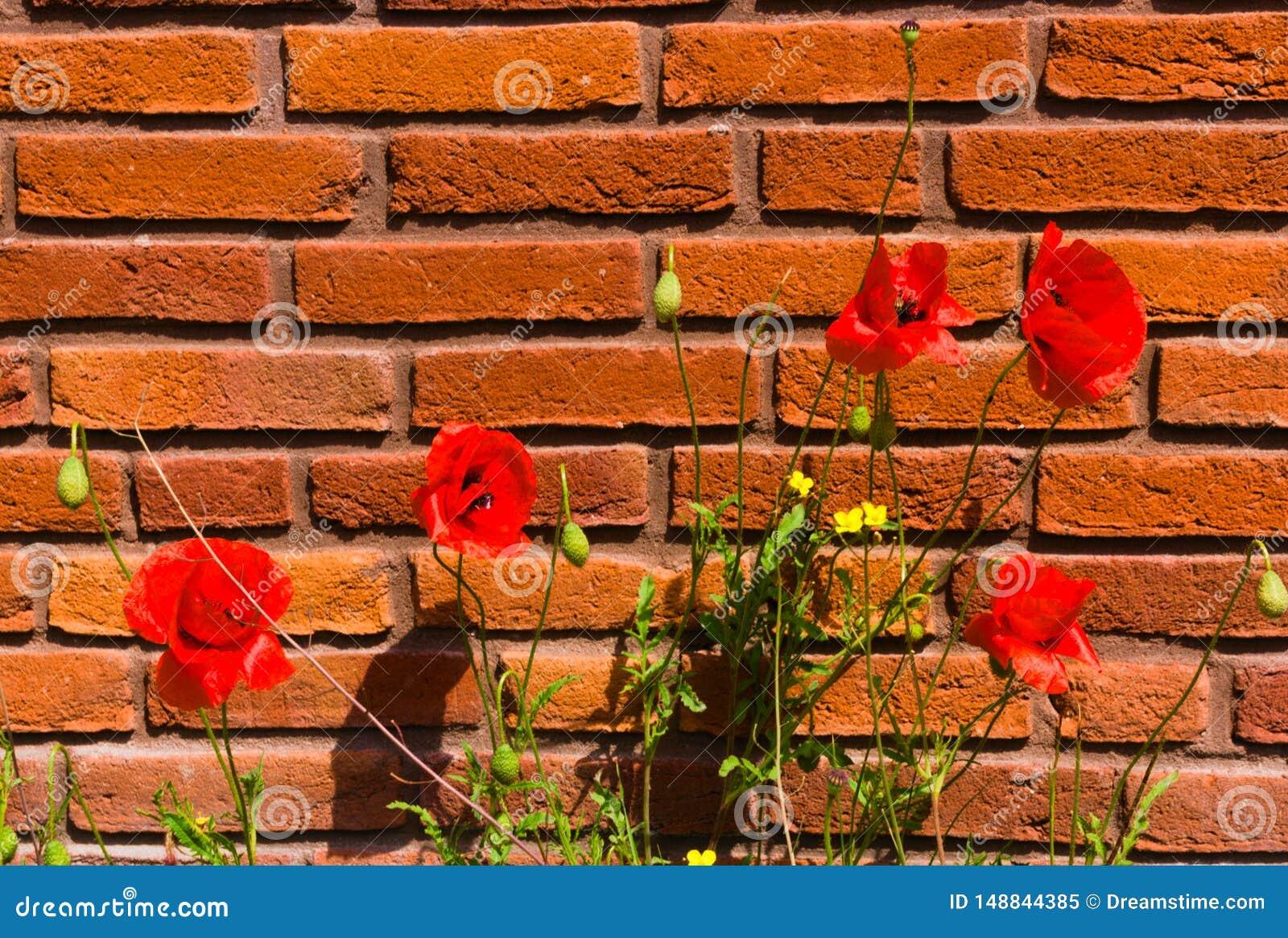 D abord floraison des fleurs au printemps