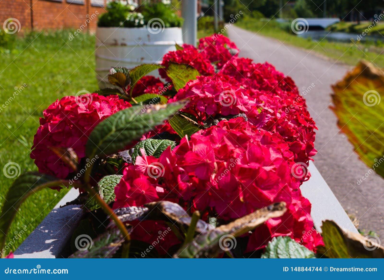 D abord floraison des fleurs pendant l ?t?