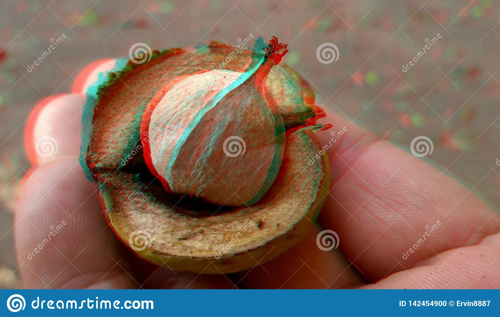 3D, anaglyph.Rype hickory nut. Autumn