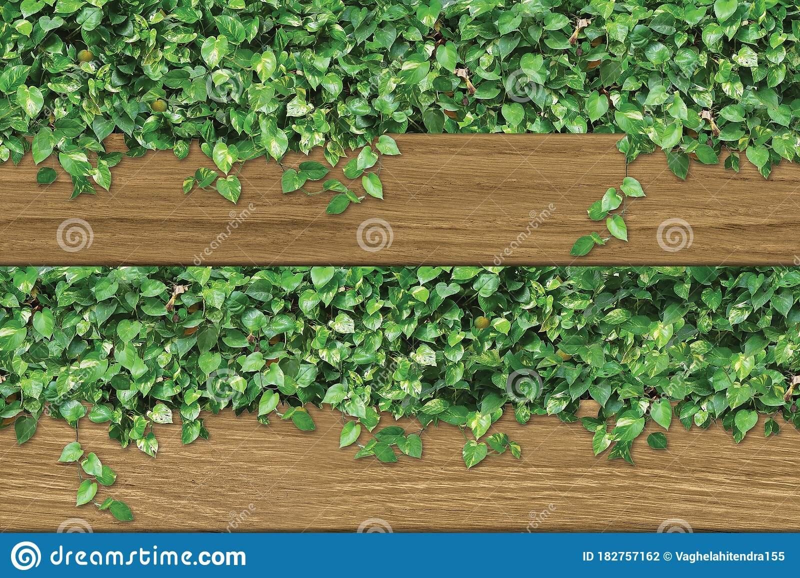 3d Ceramic Wall Tiles 3d Rendering Wood And Green Leaves For Wall Decor Modern Illustration For Wall Decor Garden Stock Illustration Illustration Of Classic Endless 182757162