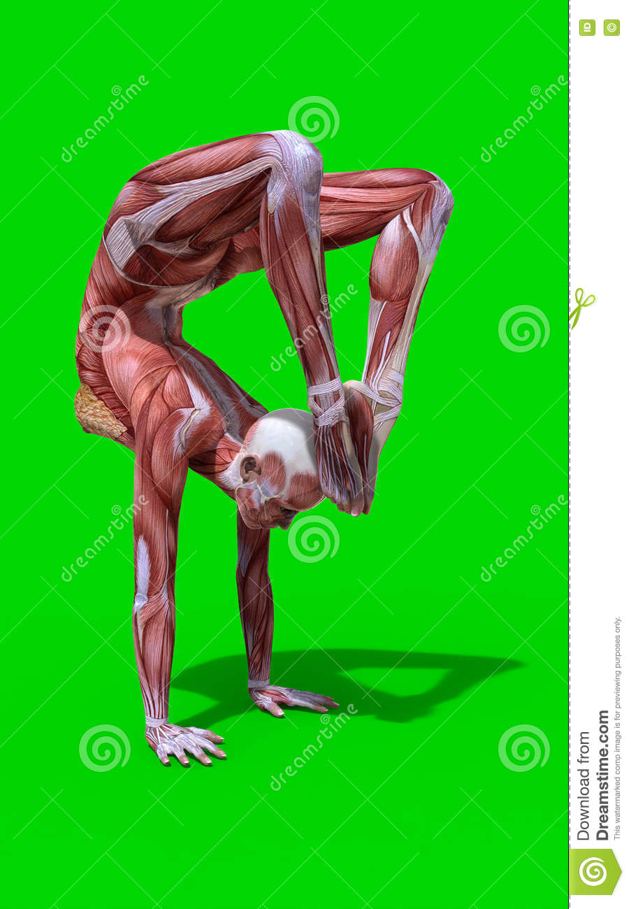 3D Digital Render Of A Scorpion Pose Female Anatomy Figure Stock ...