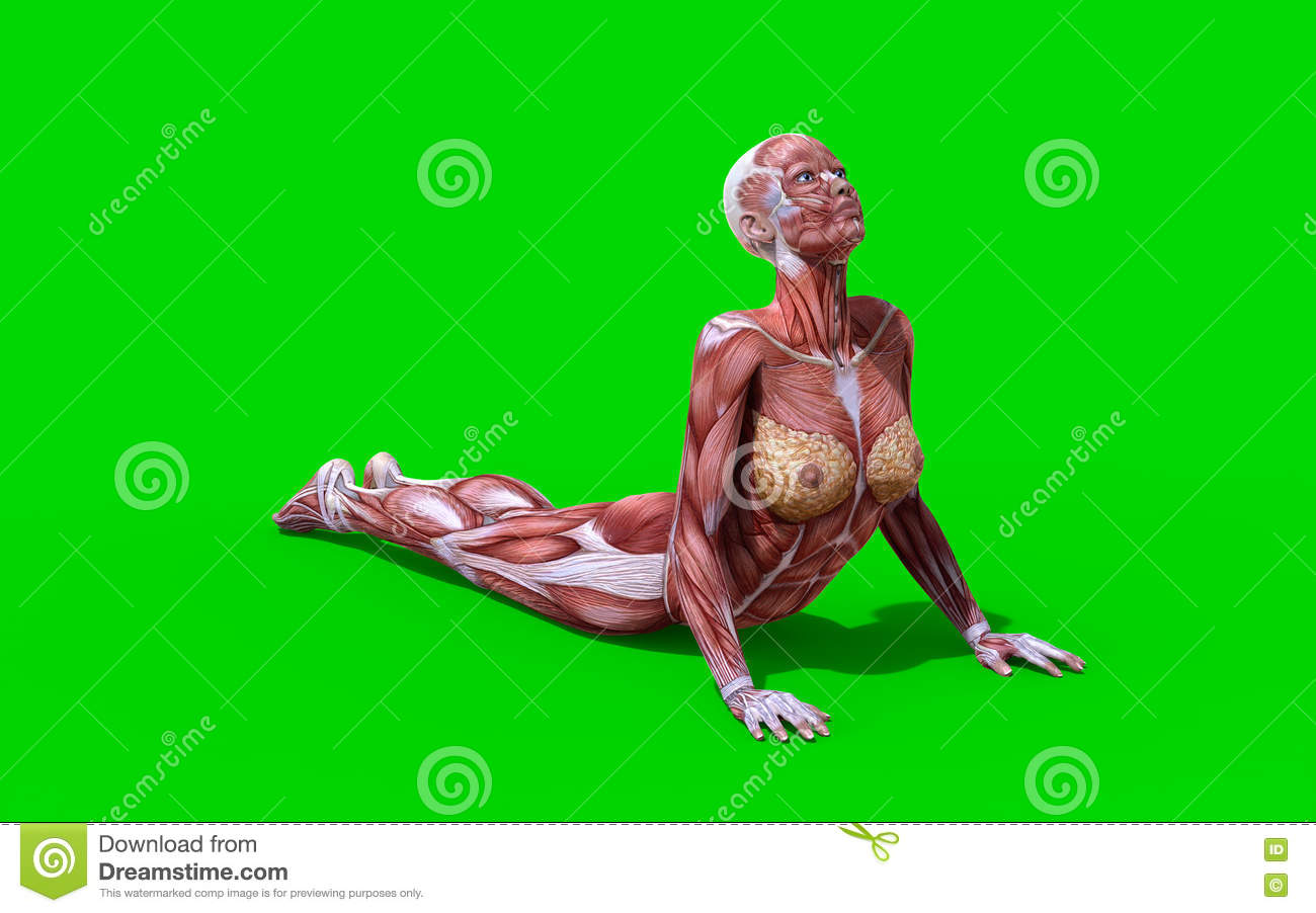 3D Digital Render Of A Snake Pose Female Anatomy Figure Stock ...