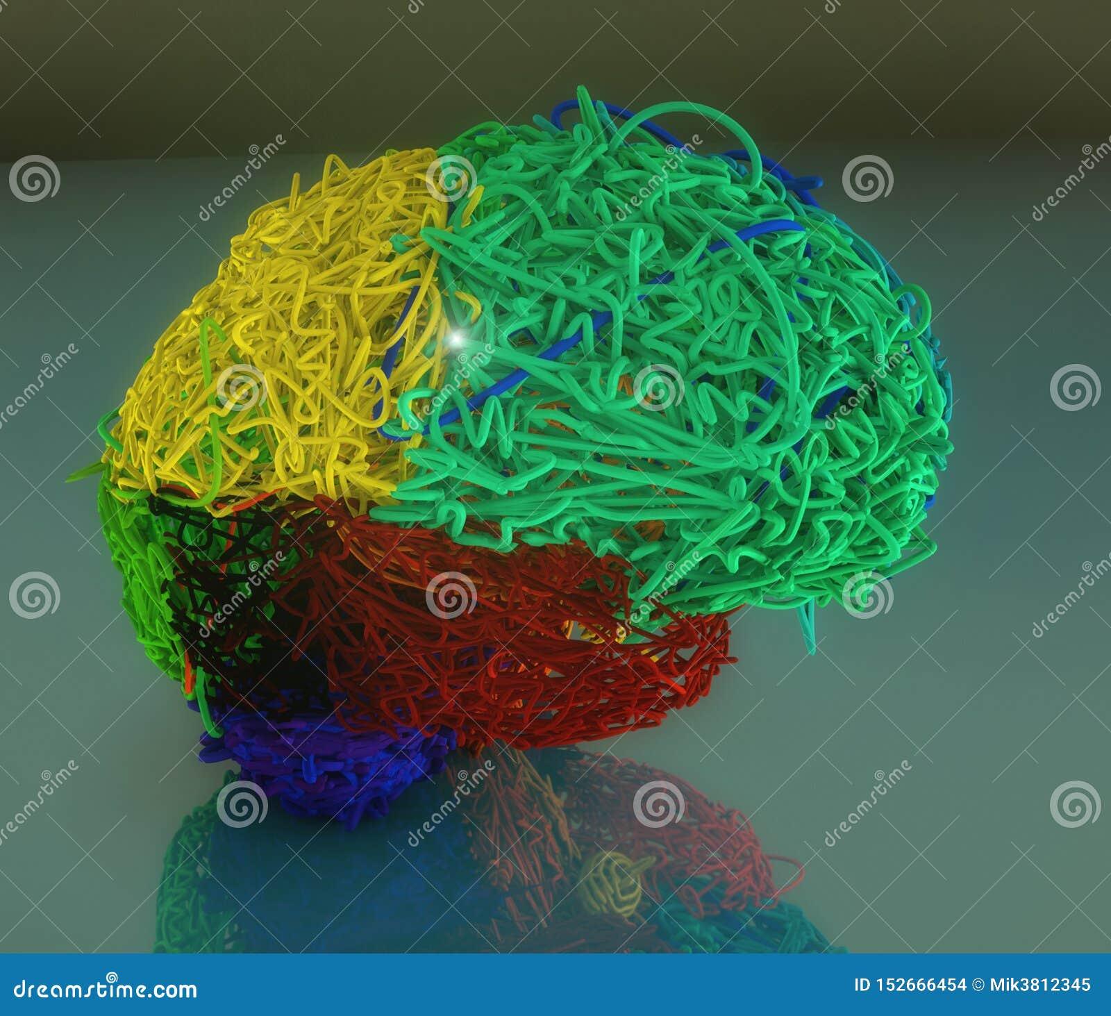 3d färbte Gehirnillustration