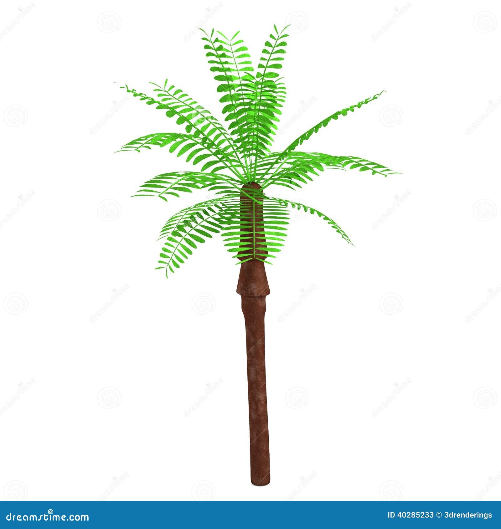 3d framför av palmträdet