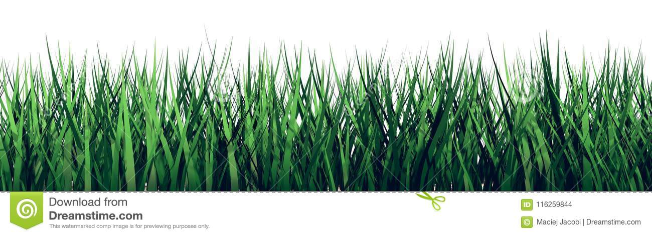 3D grass on a white background