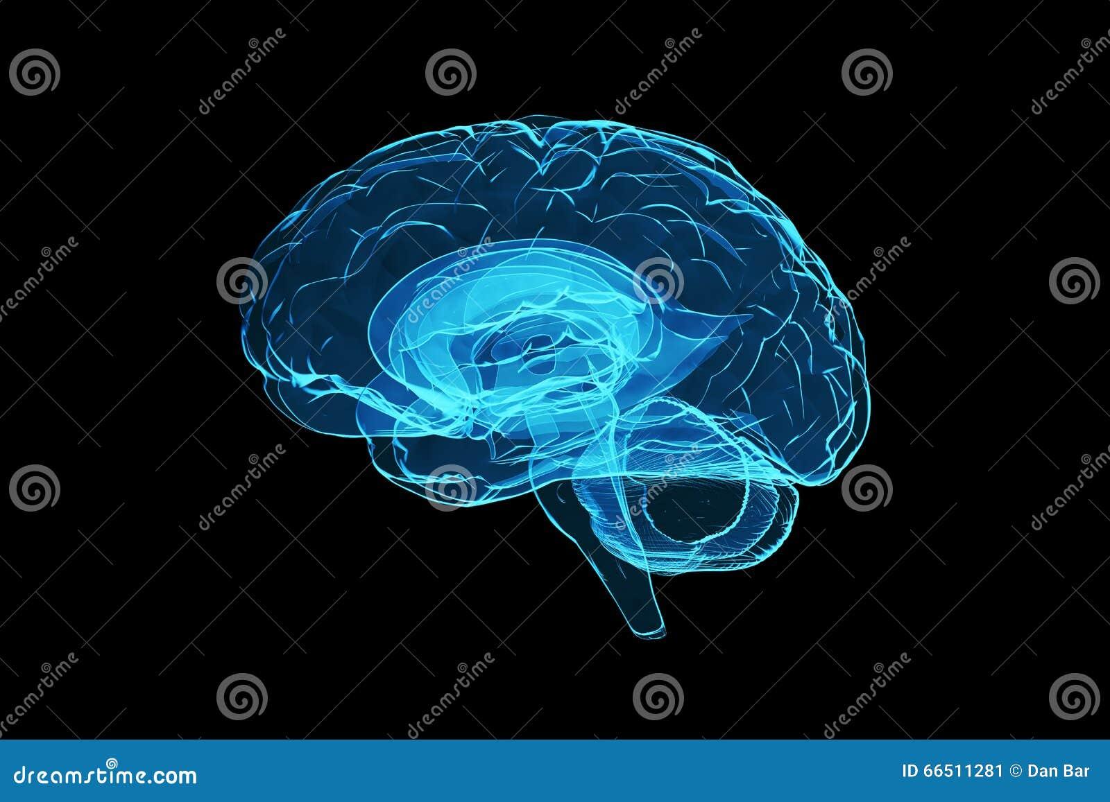 3d human brain stock illustration  Illustration of intellect