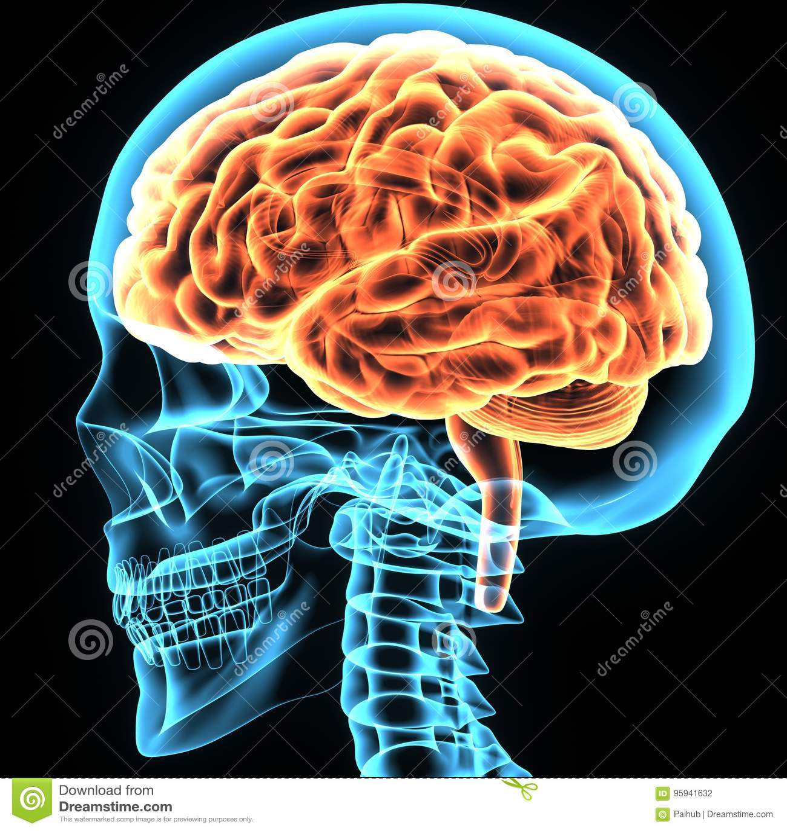 3d Illustration Of Human Body Brain Anatomy Stock Illustration
