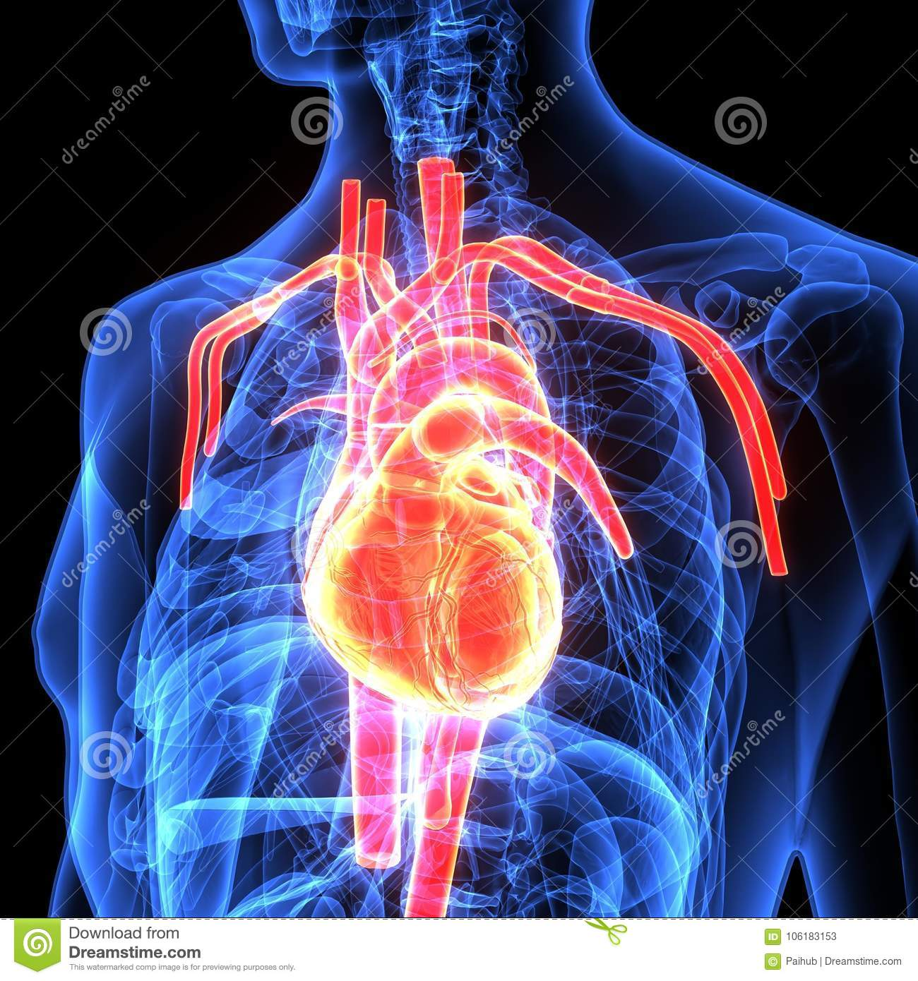 3d Illustration Of Human Body Heart Anatomy Stock Illustration
