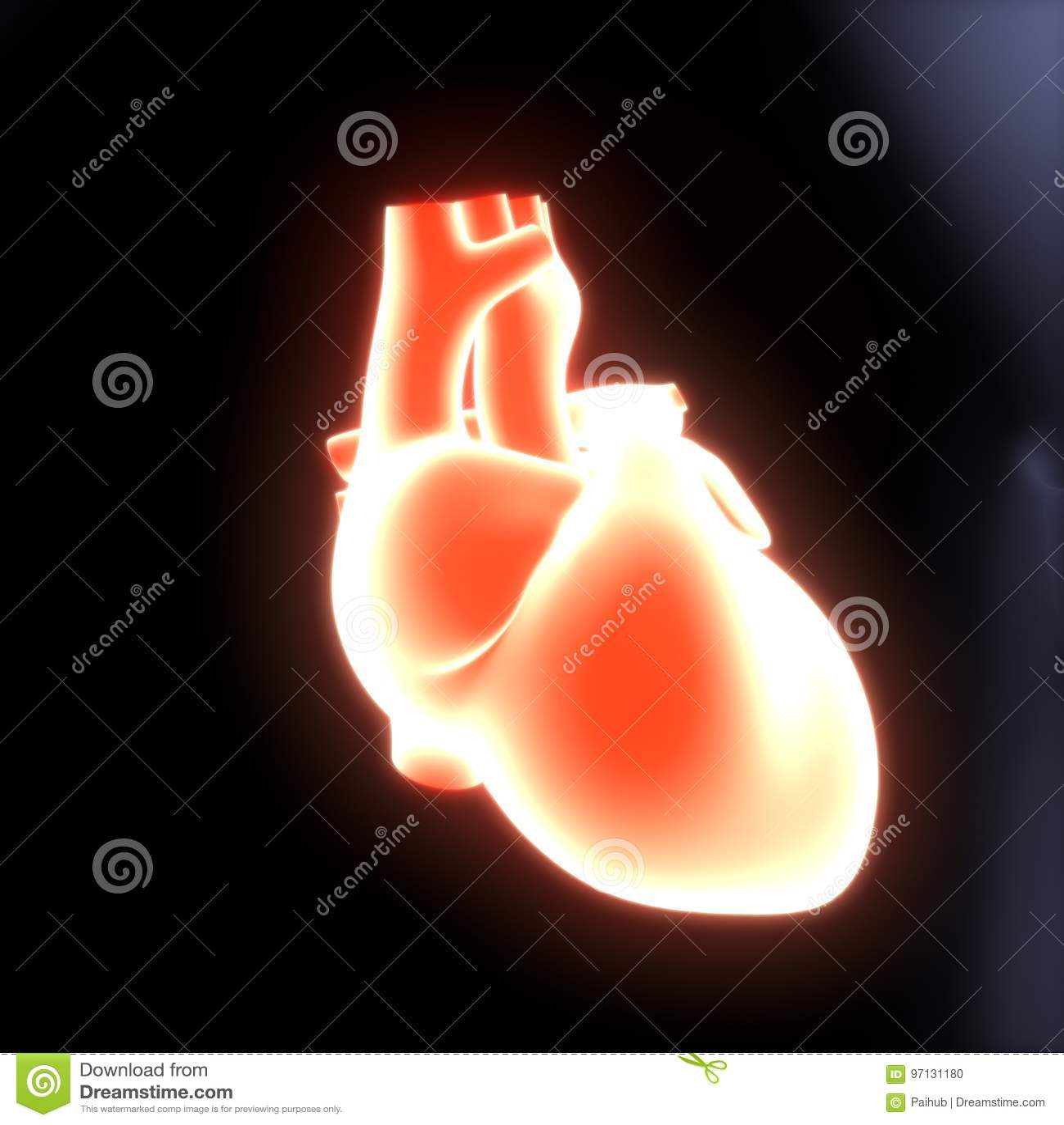 3d Illustration Of Human Body Heart Anatomy Stock Illustration