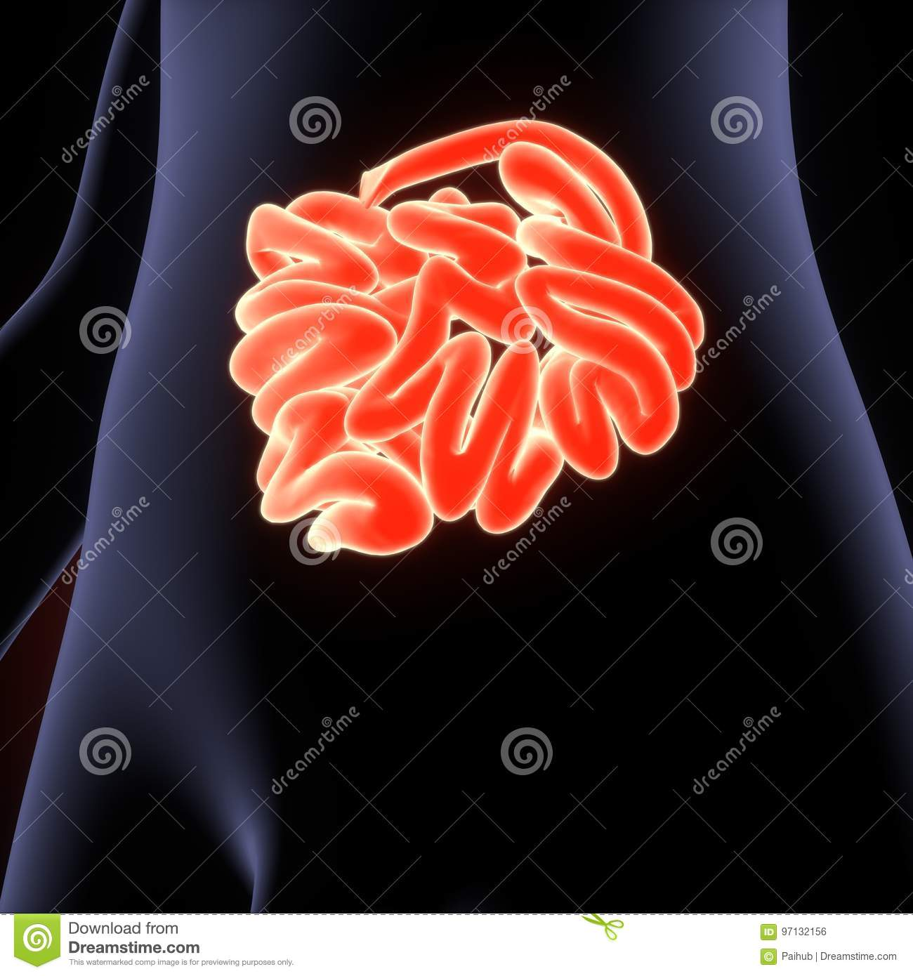 3D Illustration Of Human Digestive System Anatomy Stomach With Small ...
