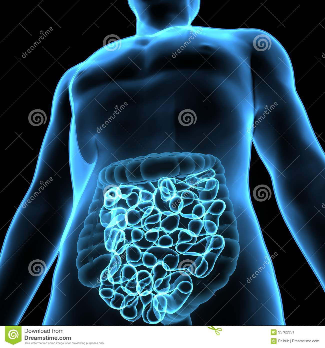 3D Illustration Of Human Digestive System Anatomy & X28;Stomach With ...