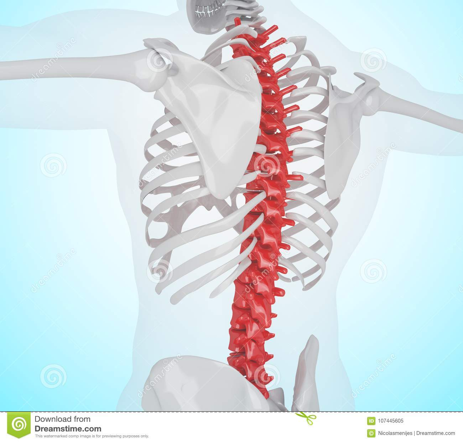 3d Illustration Of Human Skeleton Back Pain Stock Illustration