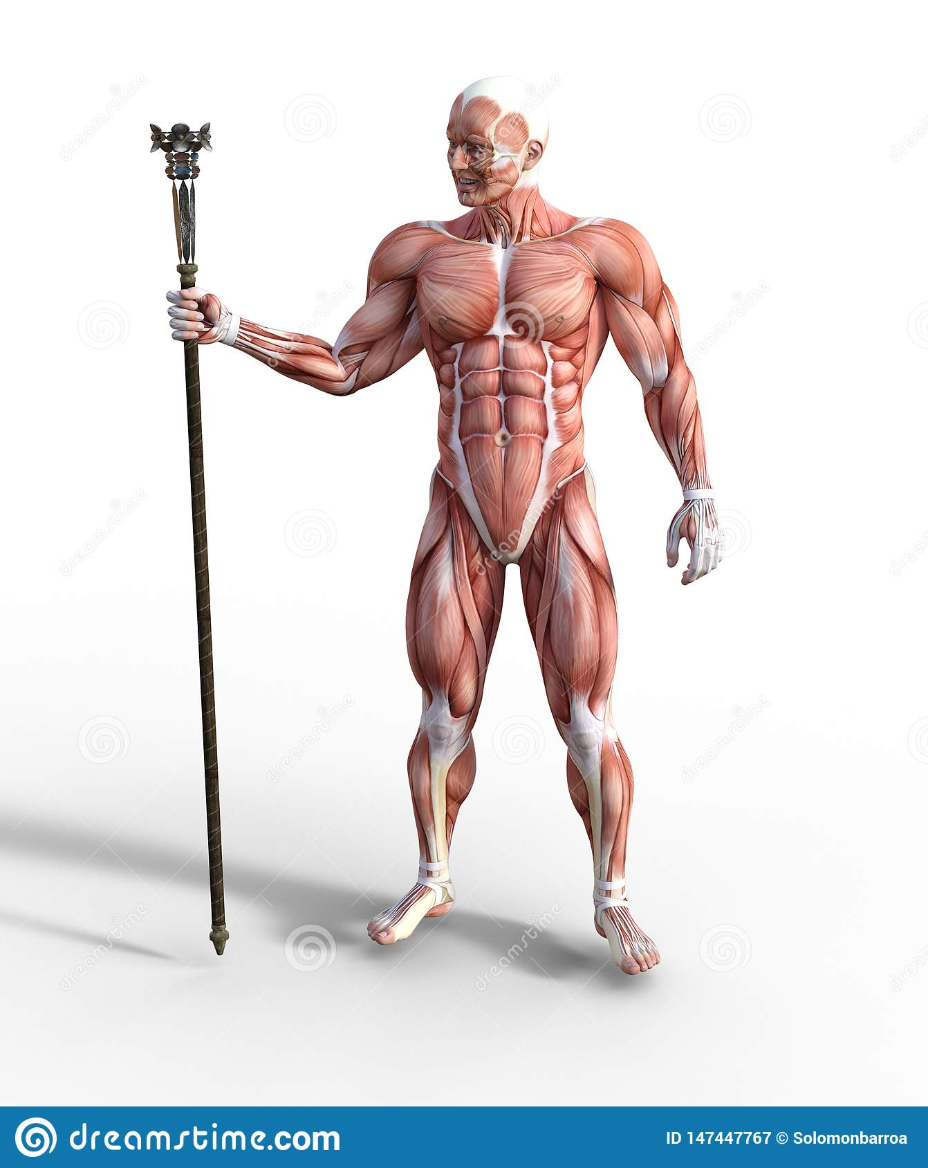 3D Illustration of Male Muscular System holding a staff