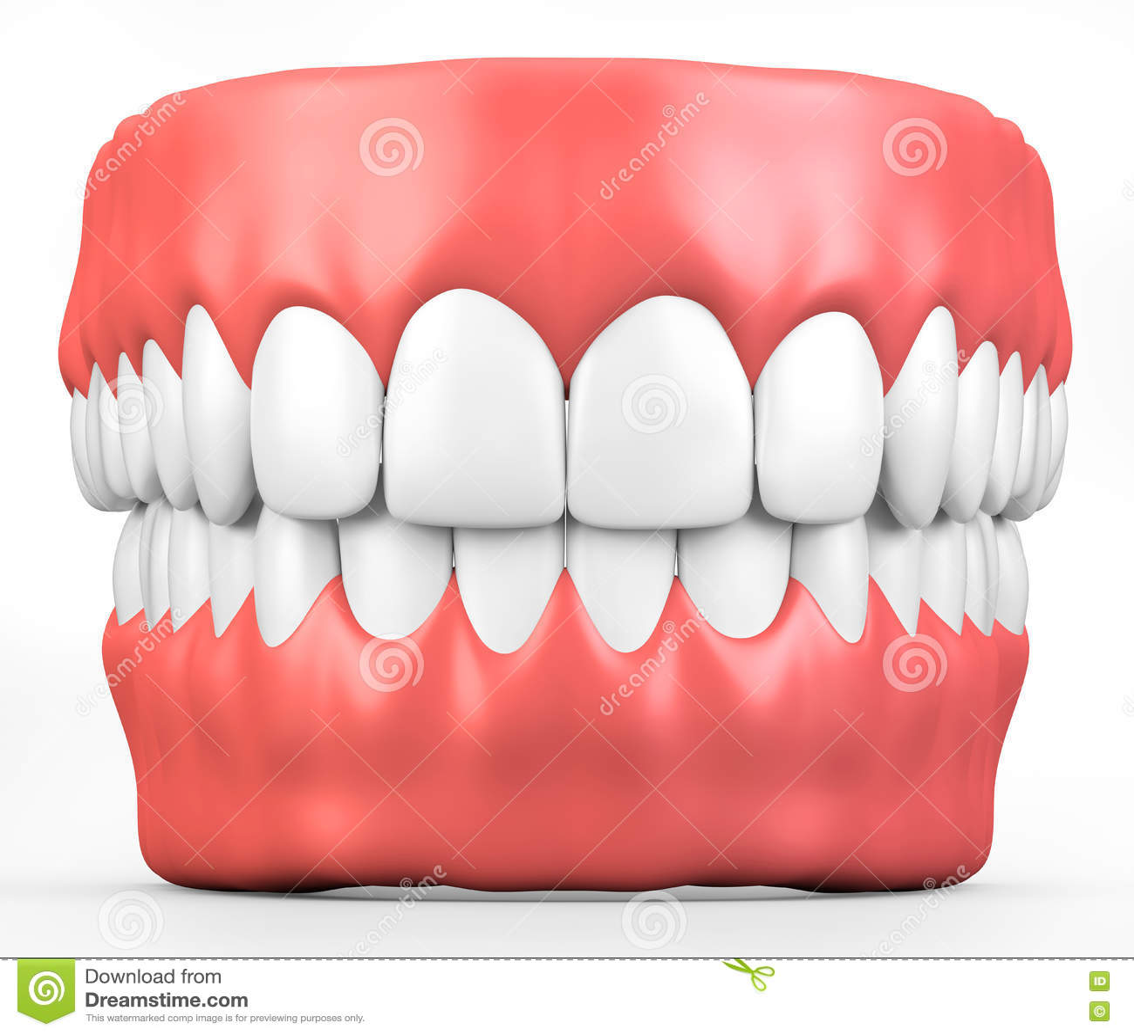 3d Illustration Teeth And Gum Model Stock Illustration