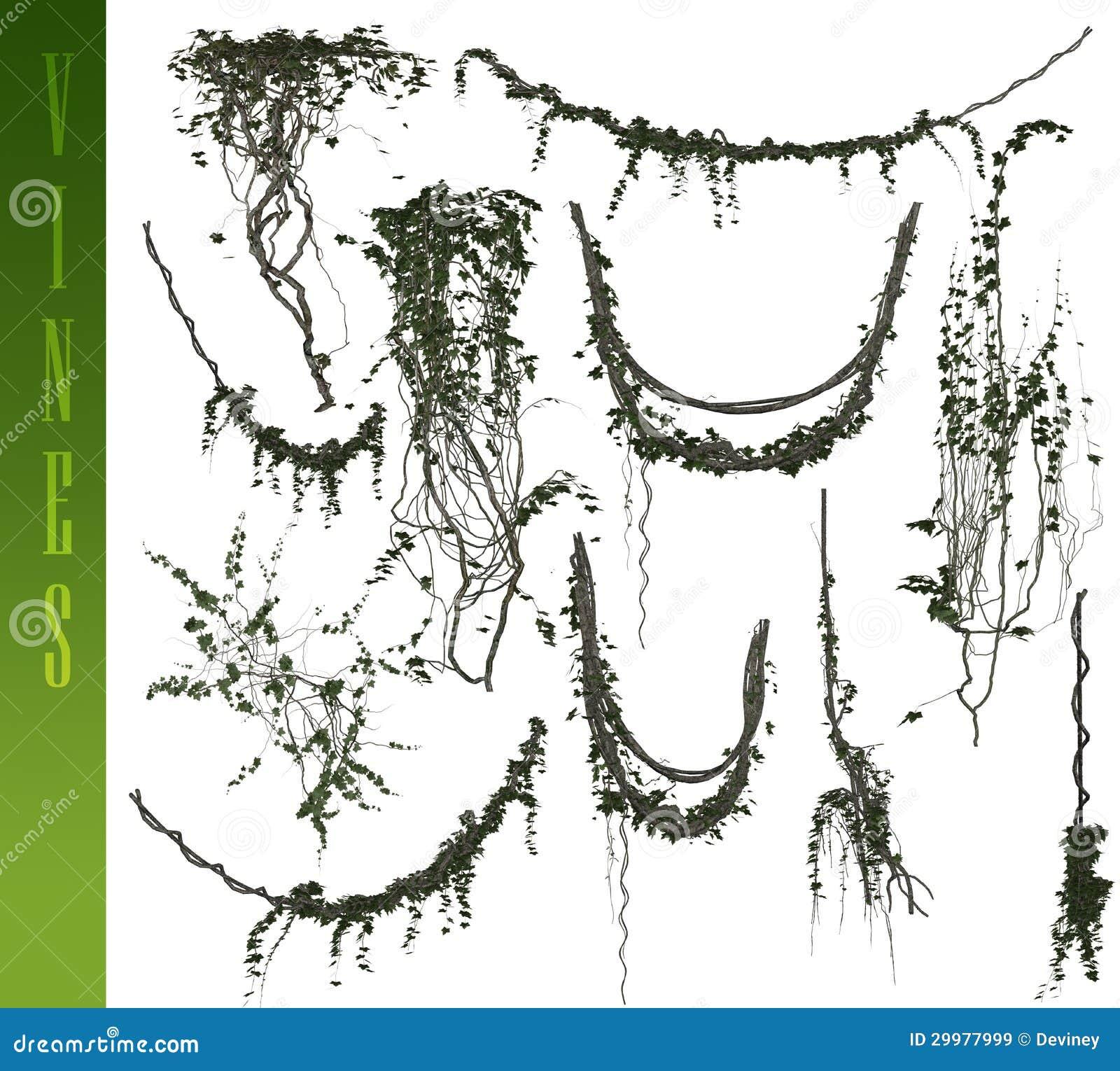 3D vines