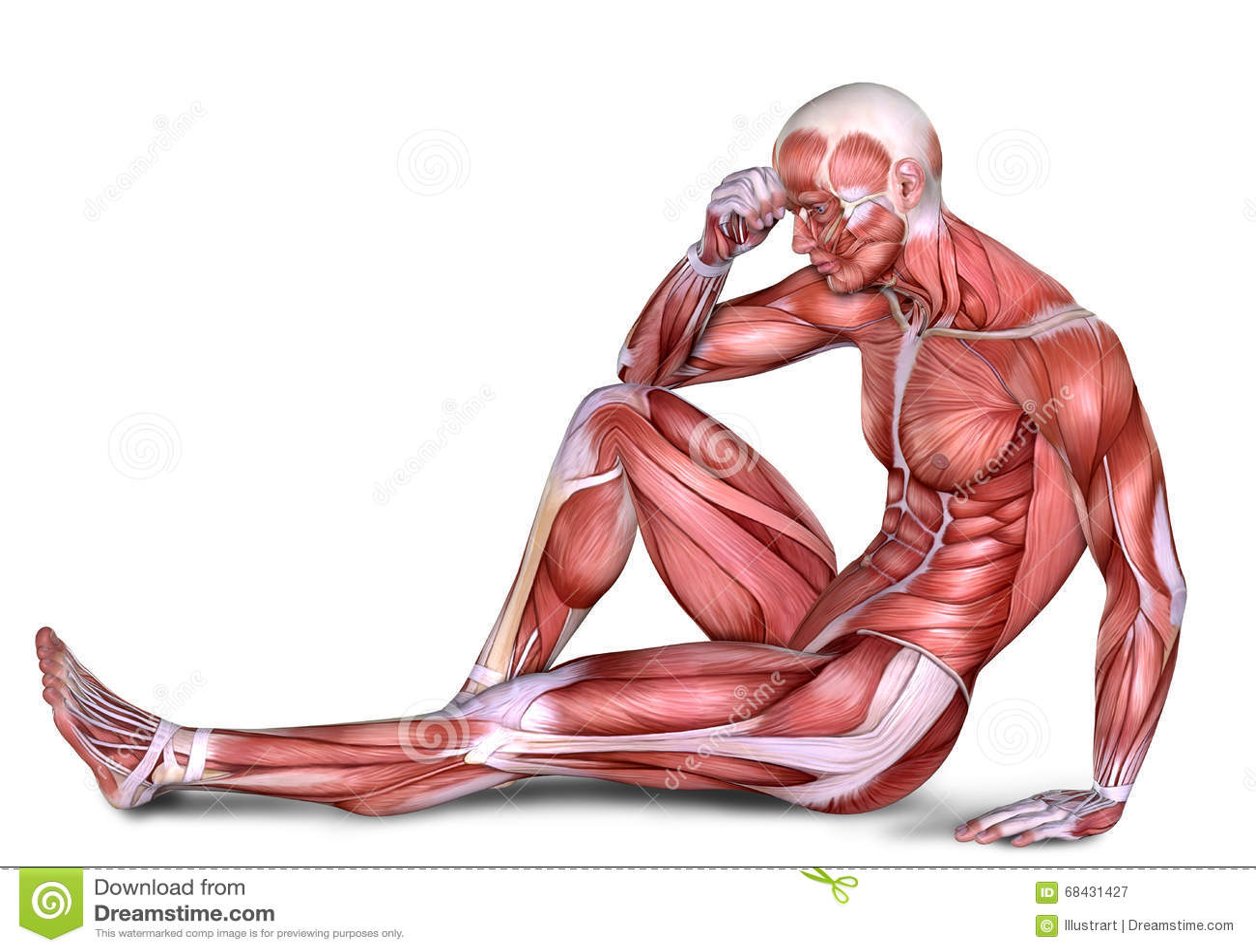3d Male Body Anatomy Stock Illustration Illustration Of Body 68431427