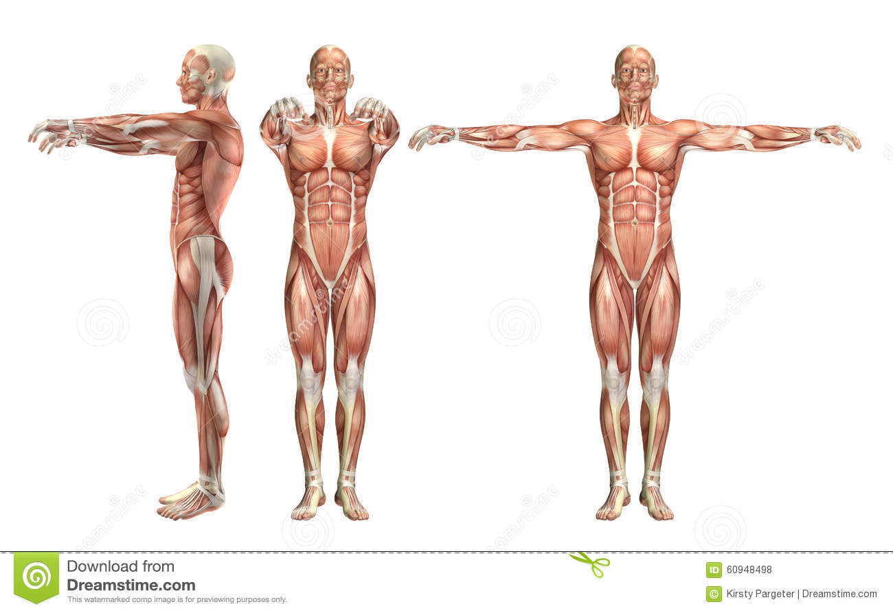 3D Male Medical Figure Showing Shoulder Abduction And Horizontal ...