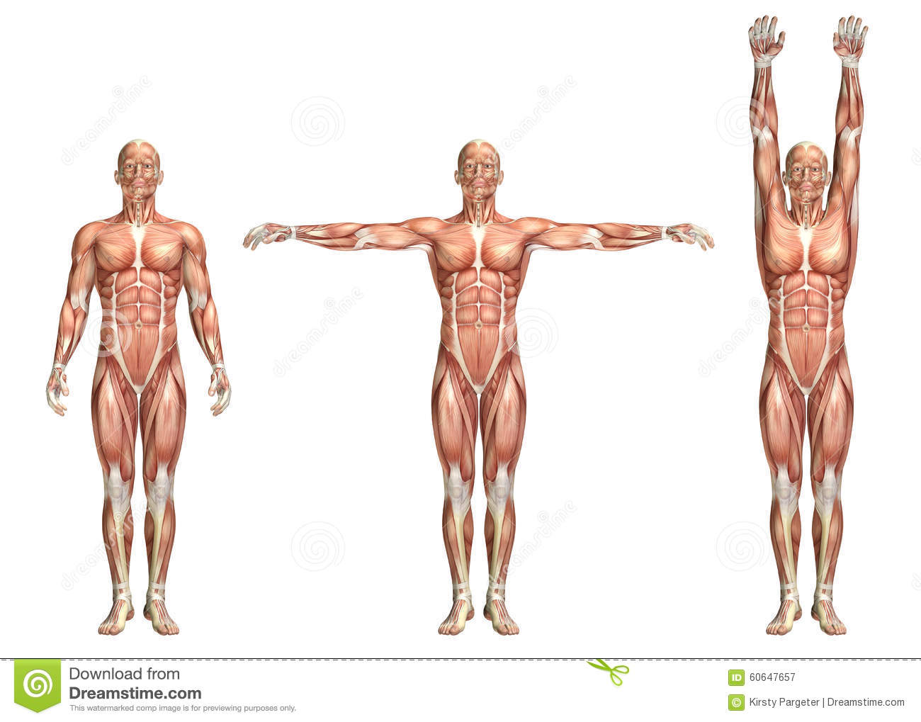 3D Medical Figure Showing Shoulder Abduction And Adduction Stock ...