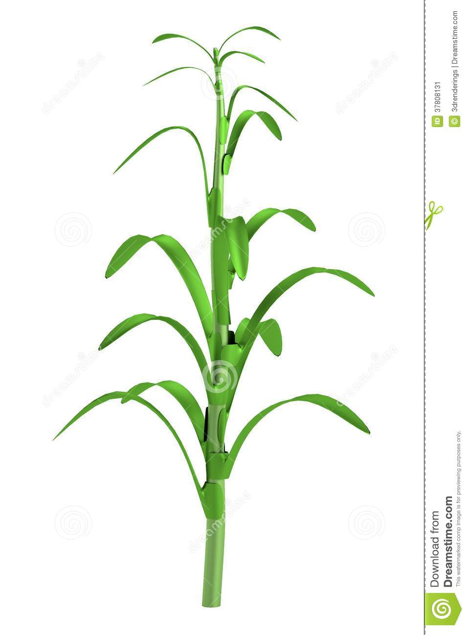 Corn Stalk With Corn 3d model of corn stalk