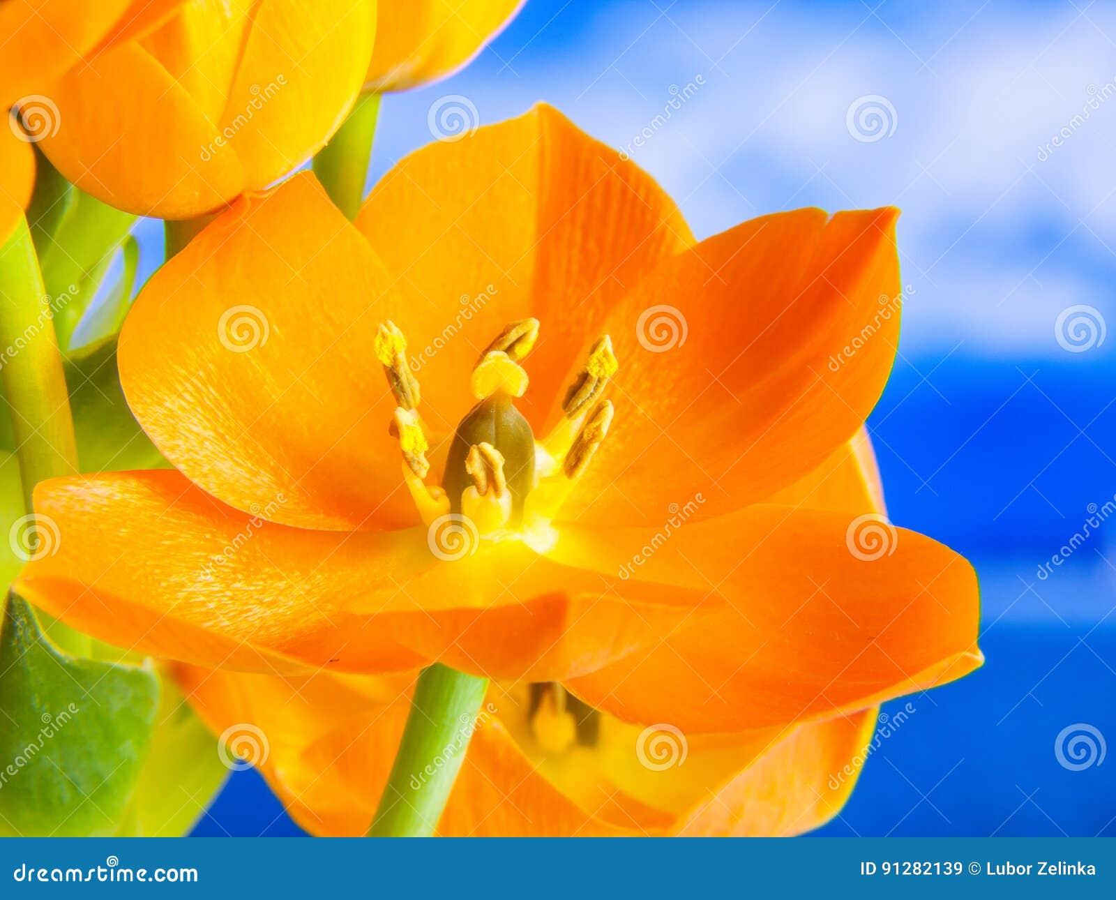 3D orange blomma, detalj
