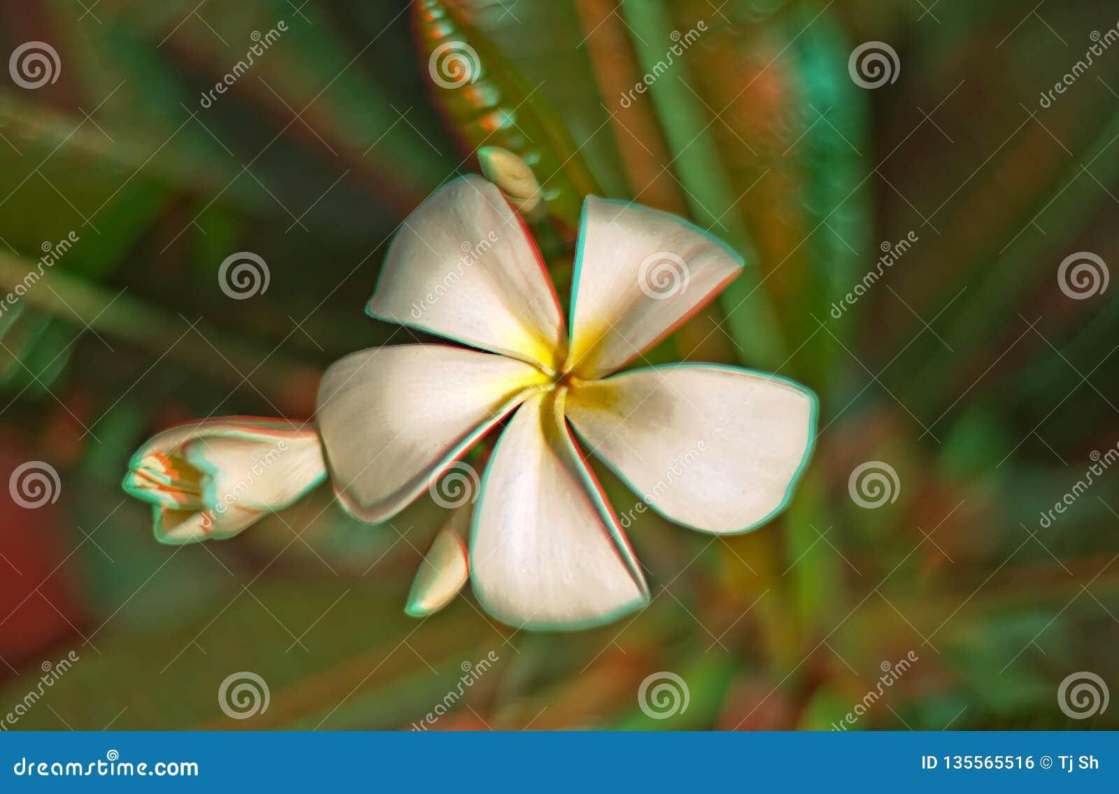 3D Plumeria-Bloei