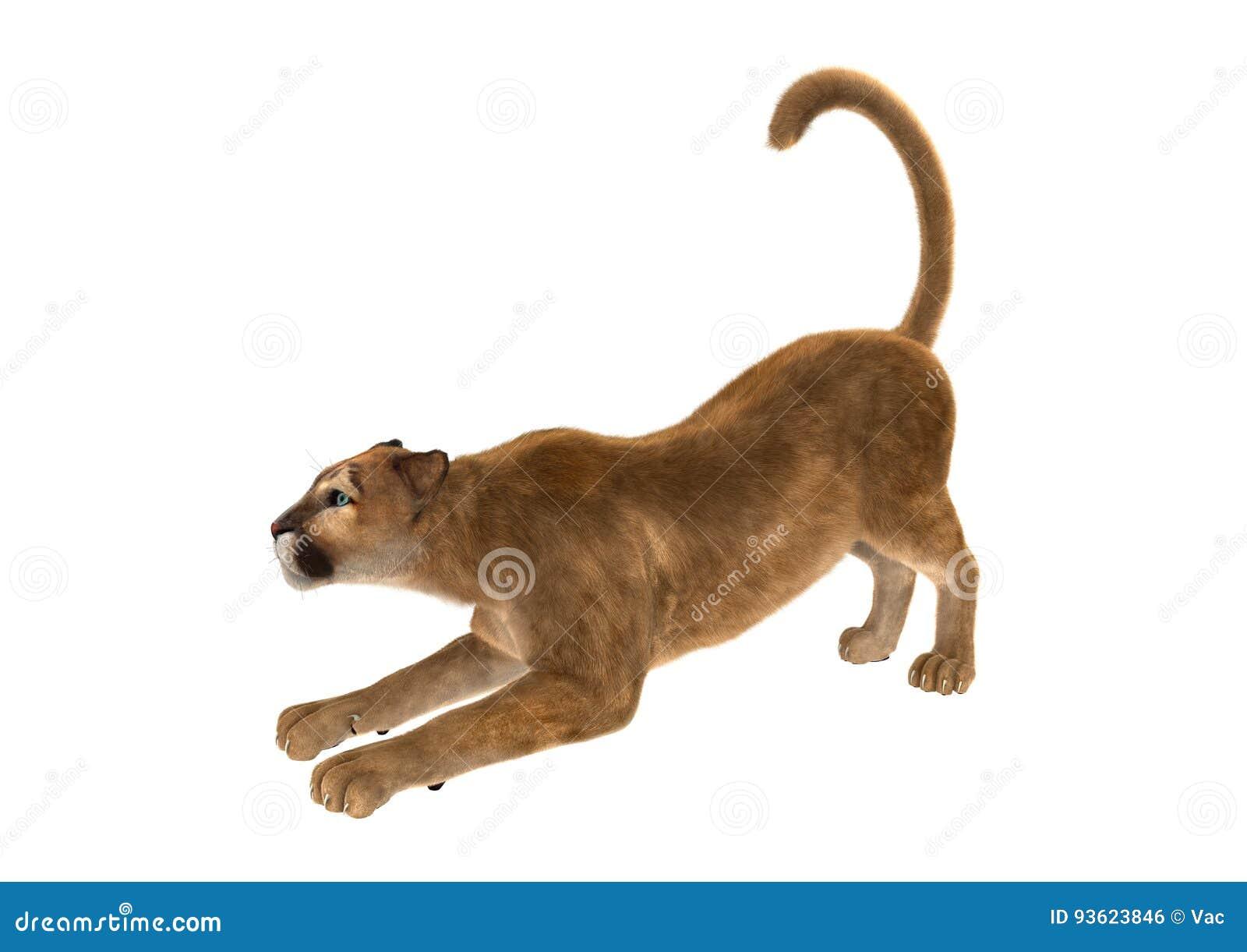Sudamerica Loco girar  3D Que Rinde A Cat Puma Grande En Blanco Foto de archivo - Imagen de puma,  grande: 93623846