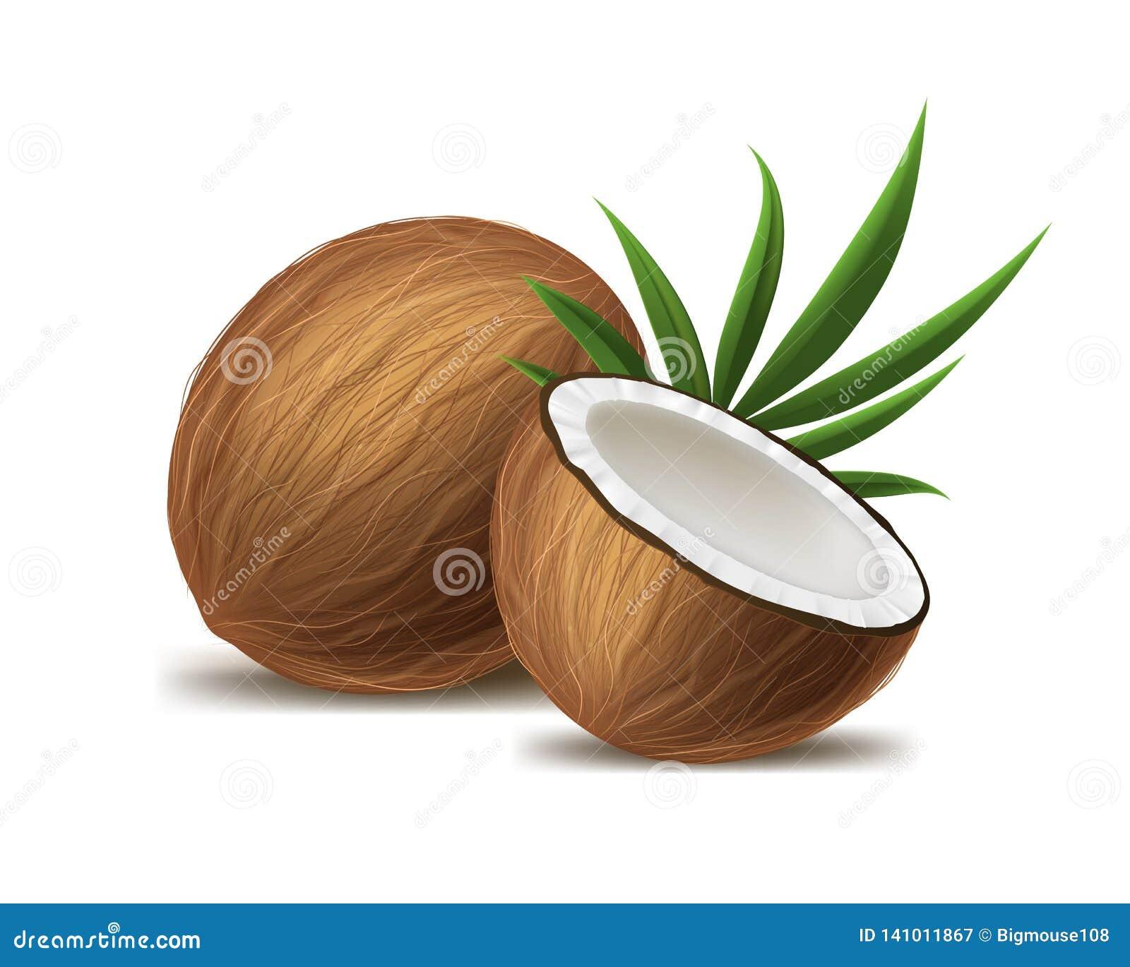 3d realistico ha dettagliato l intera noce di cocco, la metà e la foglia verde Vettore