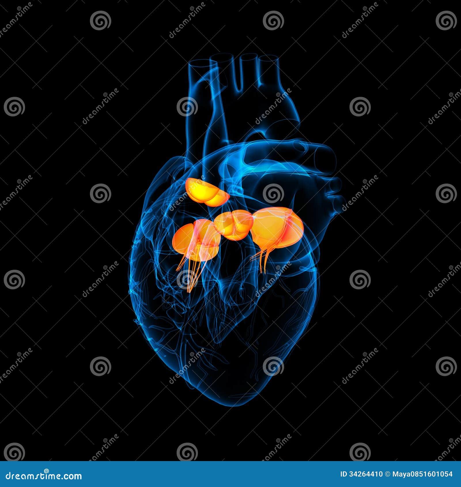 3d rendem a válvula de coração