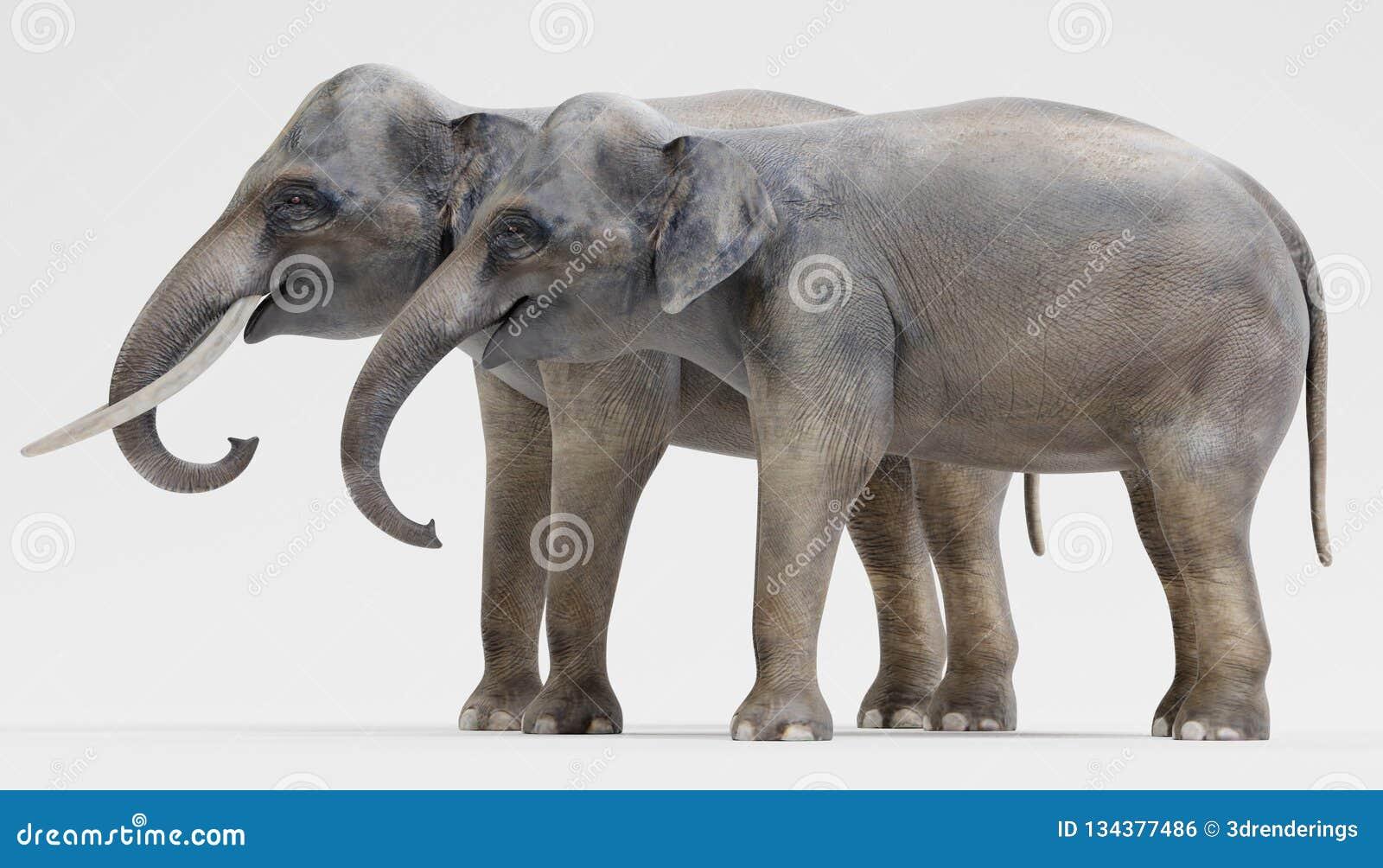 3D rendent des éléphants asiatiques illustration stock