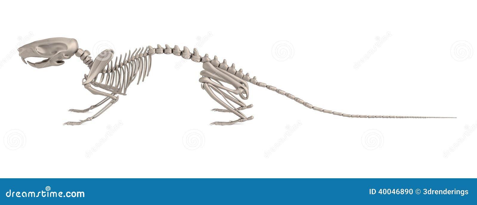 Business plan skeleton
