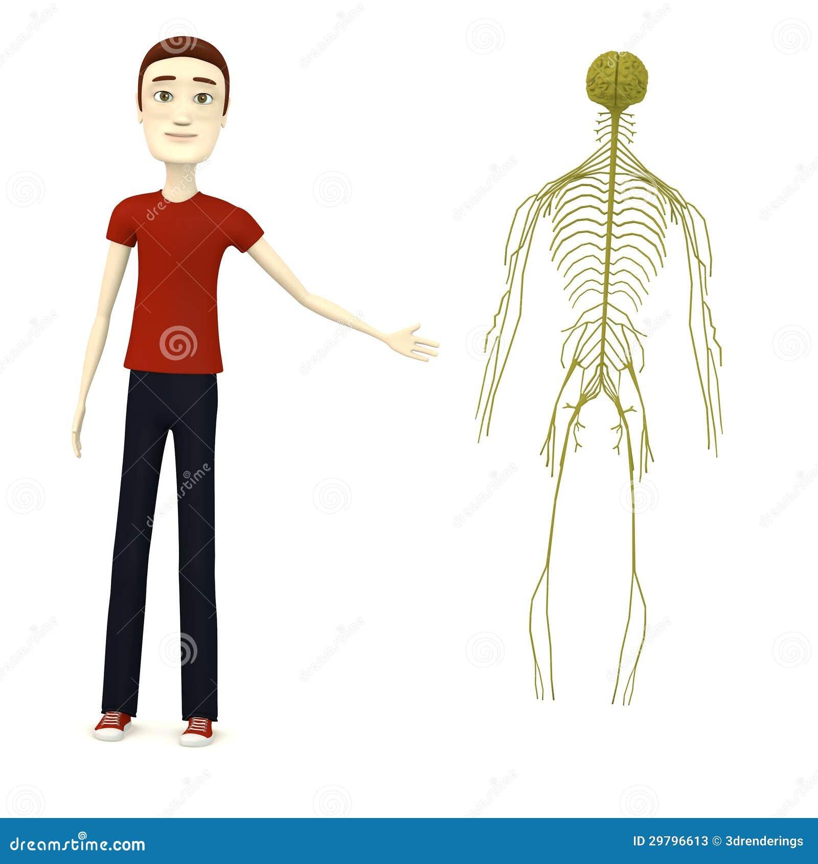 Stock Photos D Render Cartoon Boy Nervous System Image29796613
