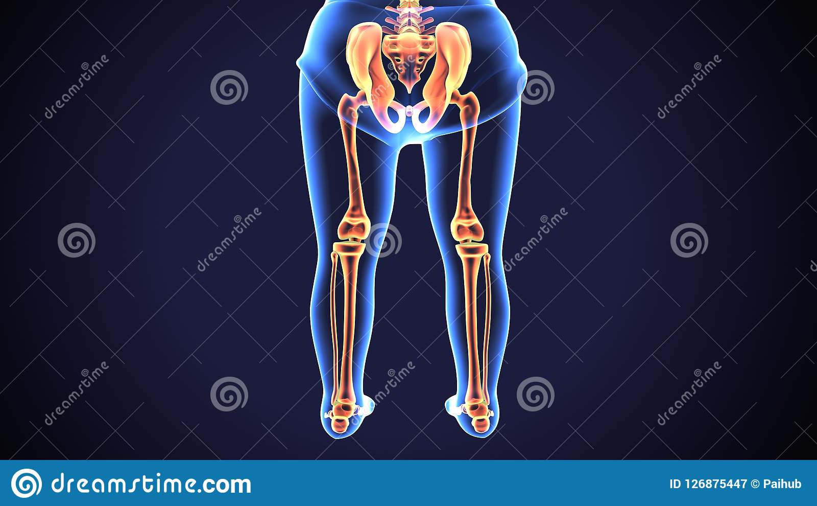 the human leg, in the general meaning, is the entire lower limb of the human  body, including the foot, thigh and even the hip or gluteal region