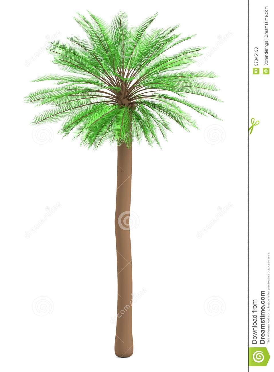 3d render of palm