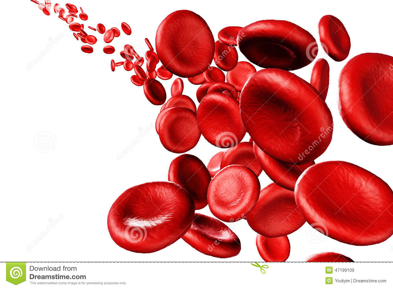 red blood cells essay