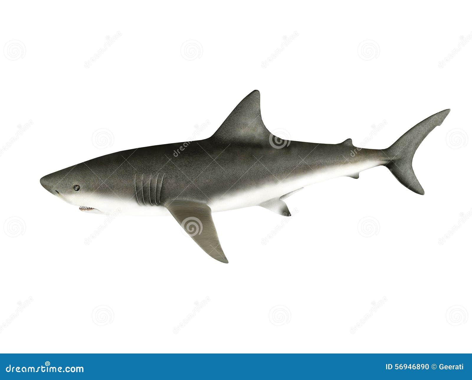 3D render shark