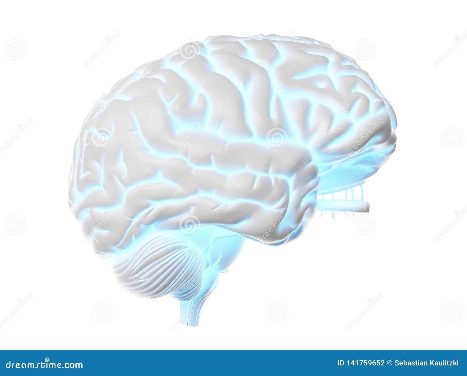 A glowing brain