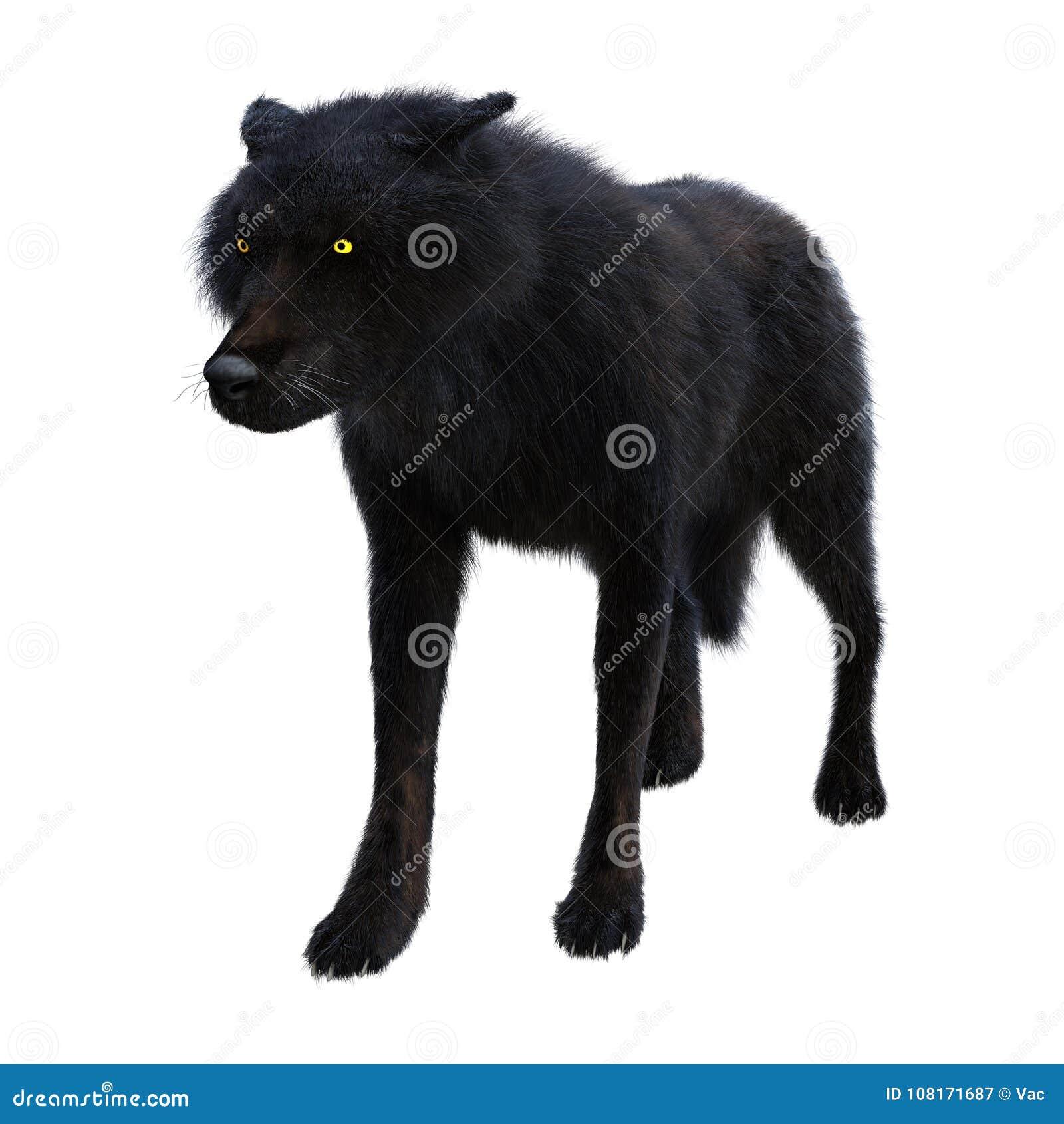 3D Rendering Black Wolf On White Stock Image