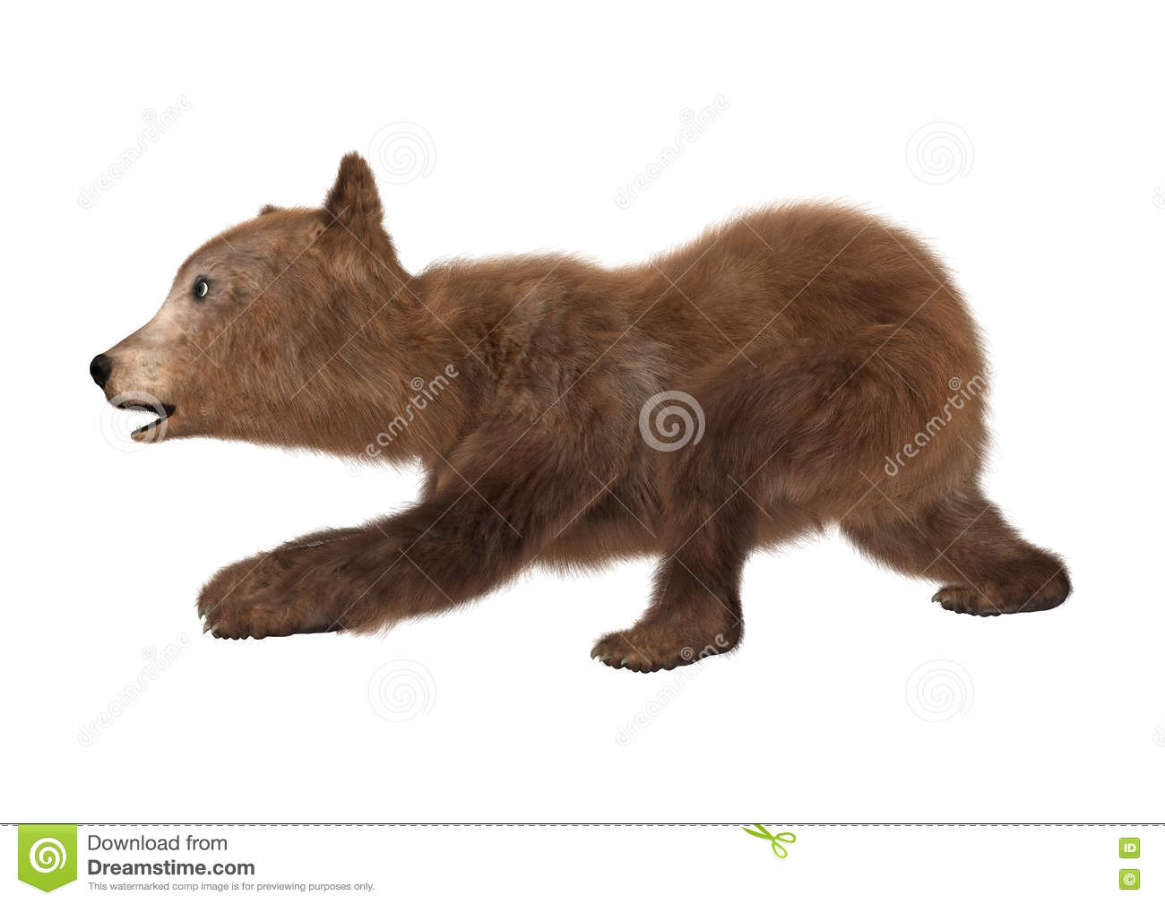 3D Rendering Brown Bear Cub On White Stock Illustration