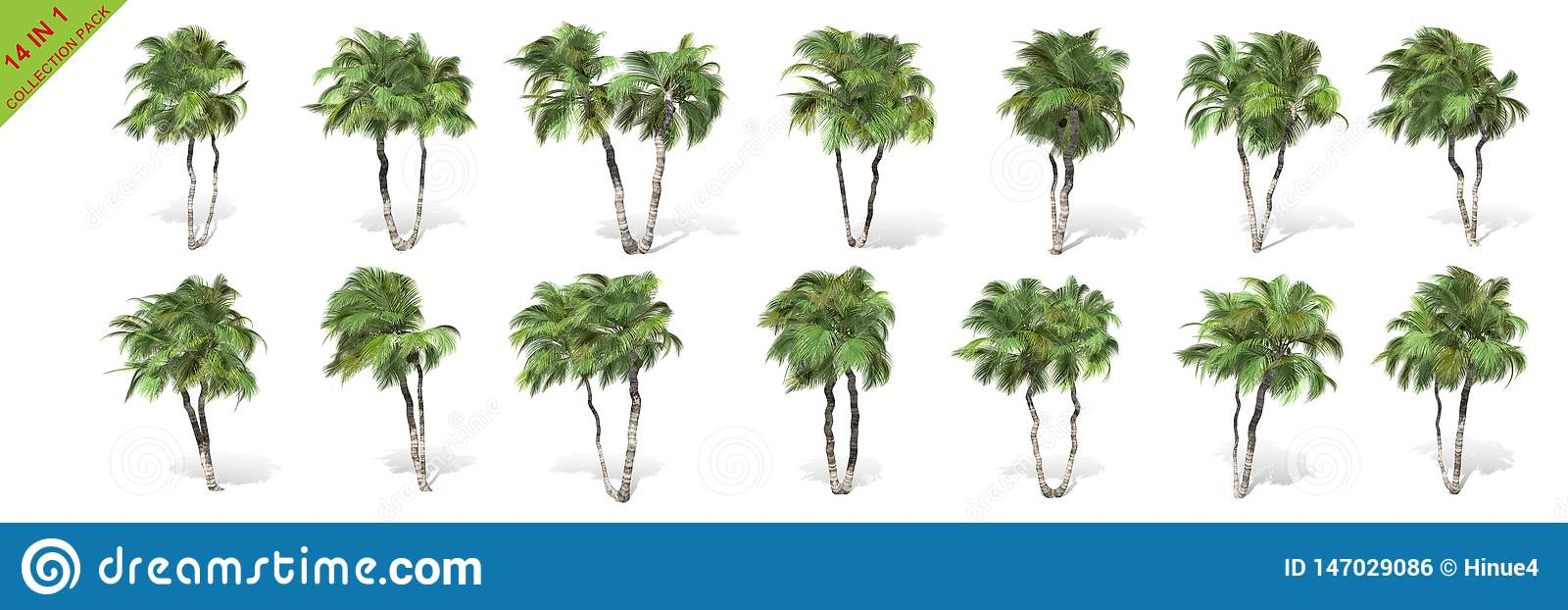 3D rendering - 14 in 1 collection of tall coconut trees isolated over a white background